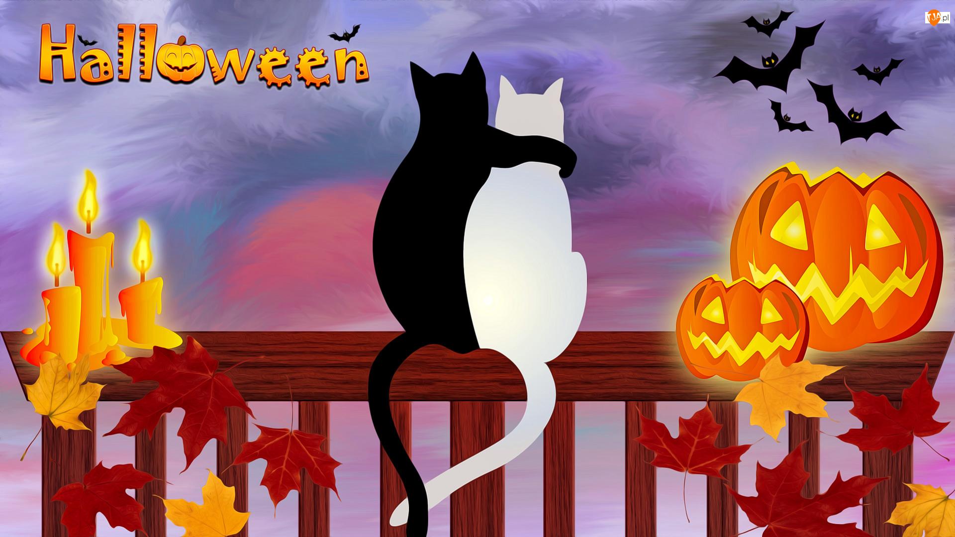 Koty, Świeczki, Grafika, Halloween, Nietoperze, Liście, Dynia