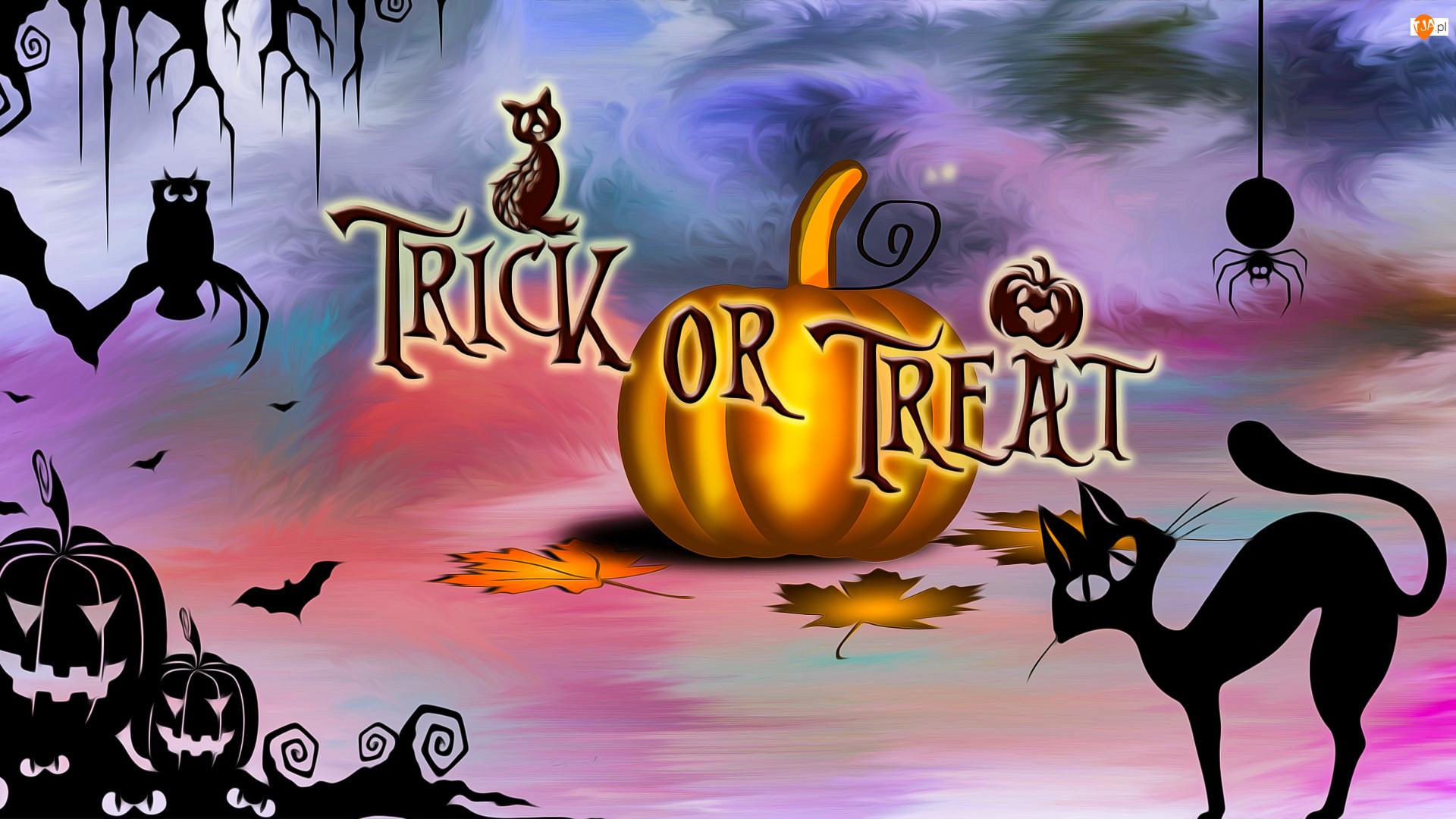 Napis, Halloween, Dynia, Grafika, Trick or Treat, Kot