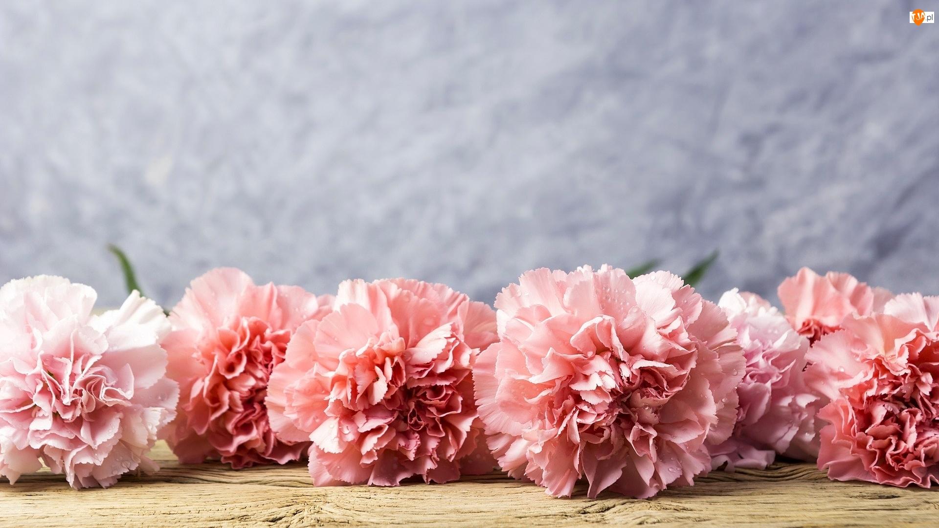 Drewno, Różowe, Goździki