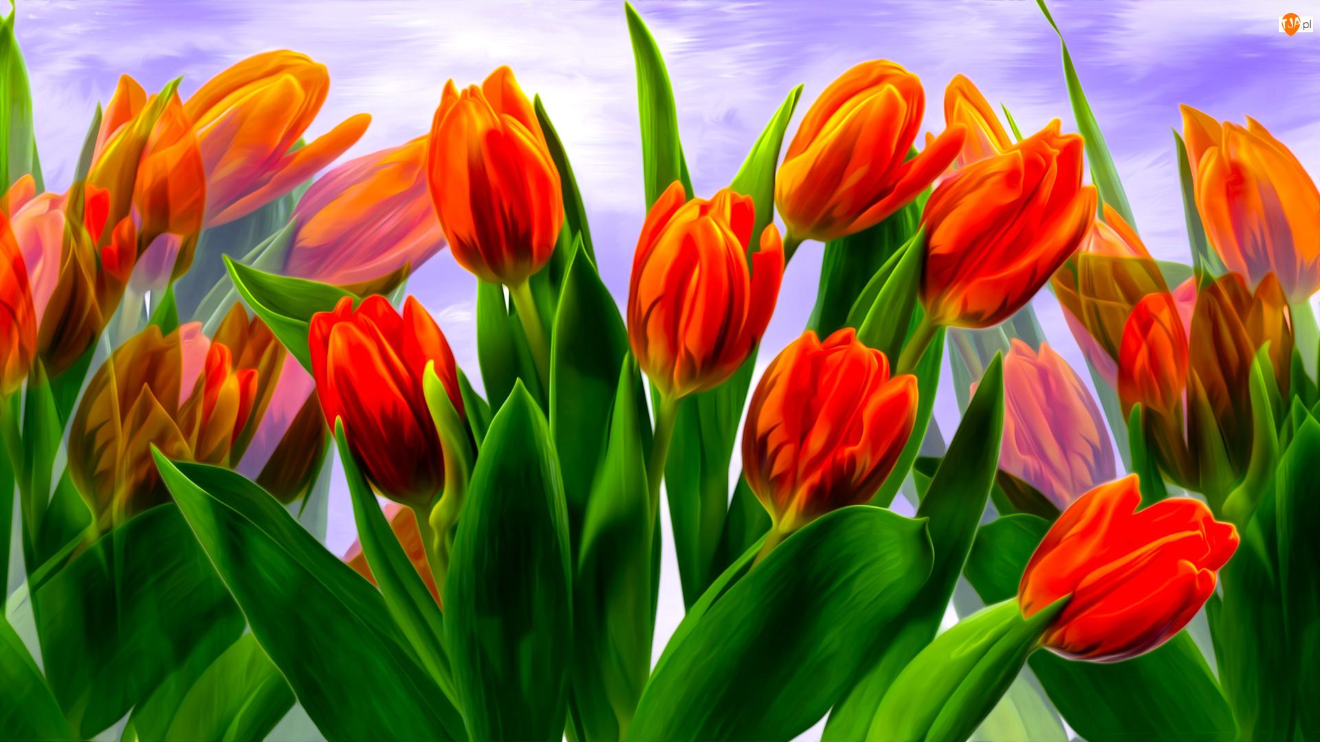 Grafika, Tulipany, Czerwone, Kwiaty