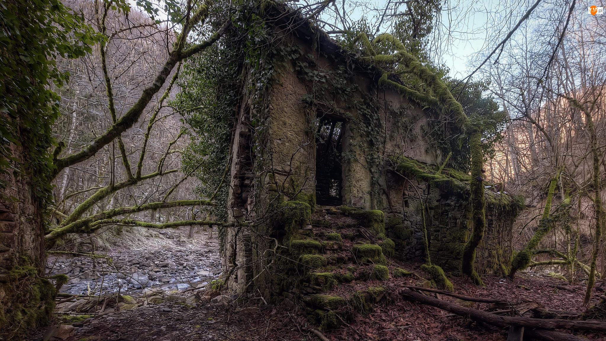 Ruina, Dom, Strumień, Liście, Drzewa, Kamienie