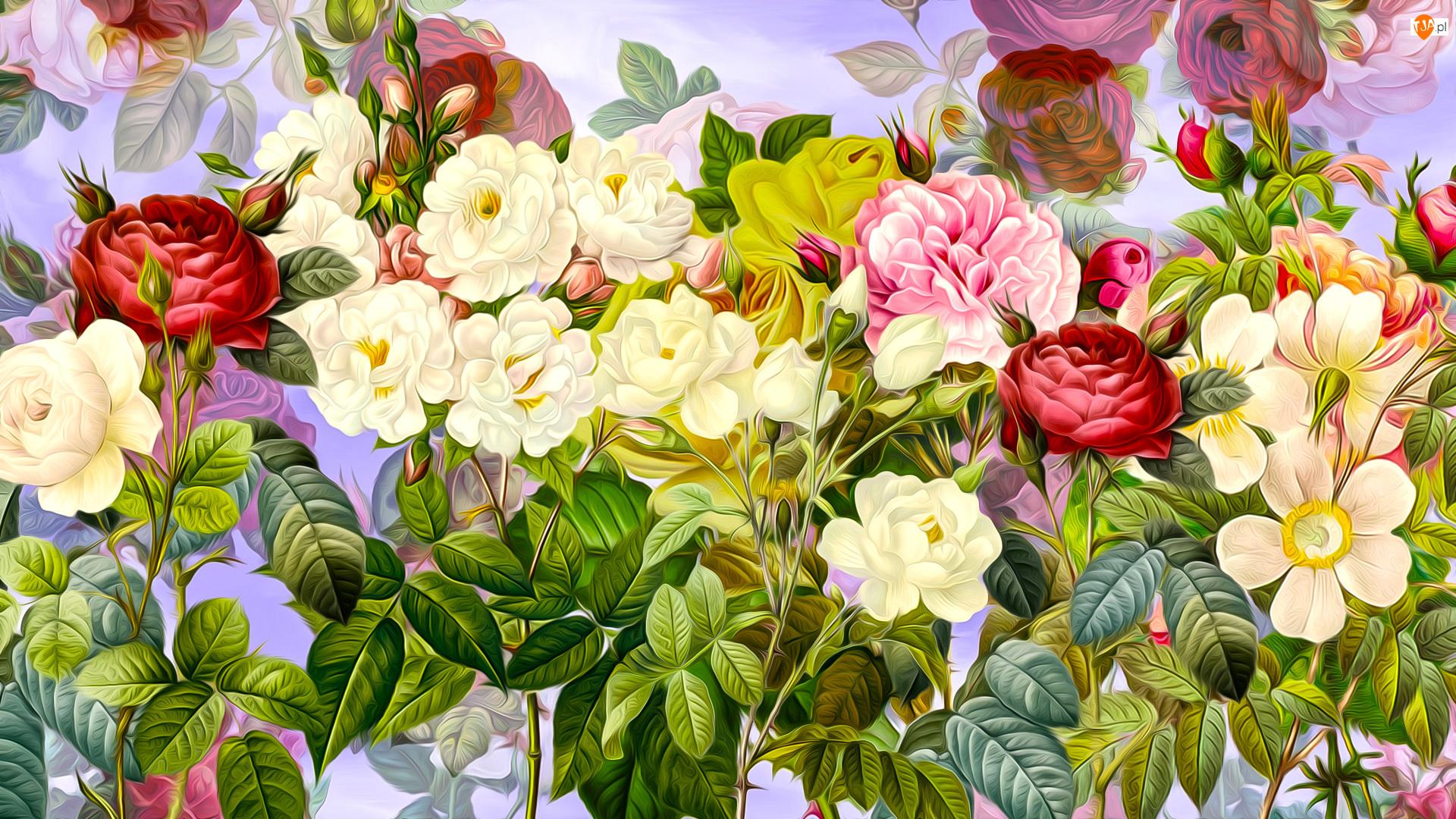 Białe, Kwiaty, Czerwone, Grafika, Różowa, Róże