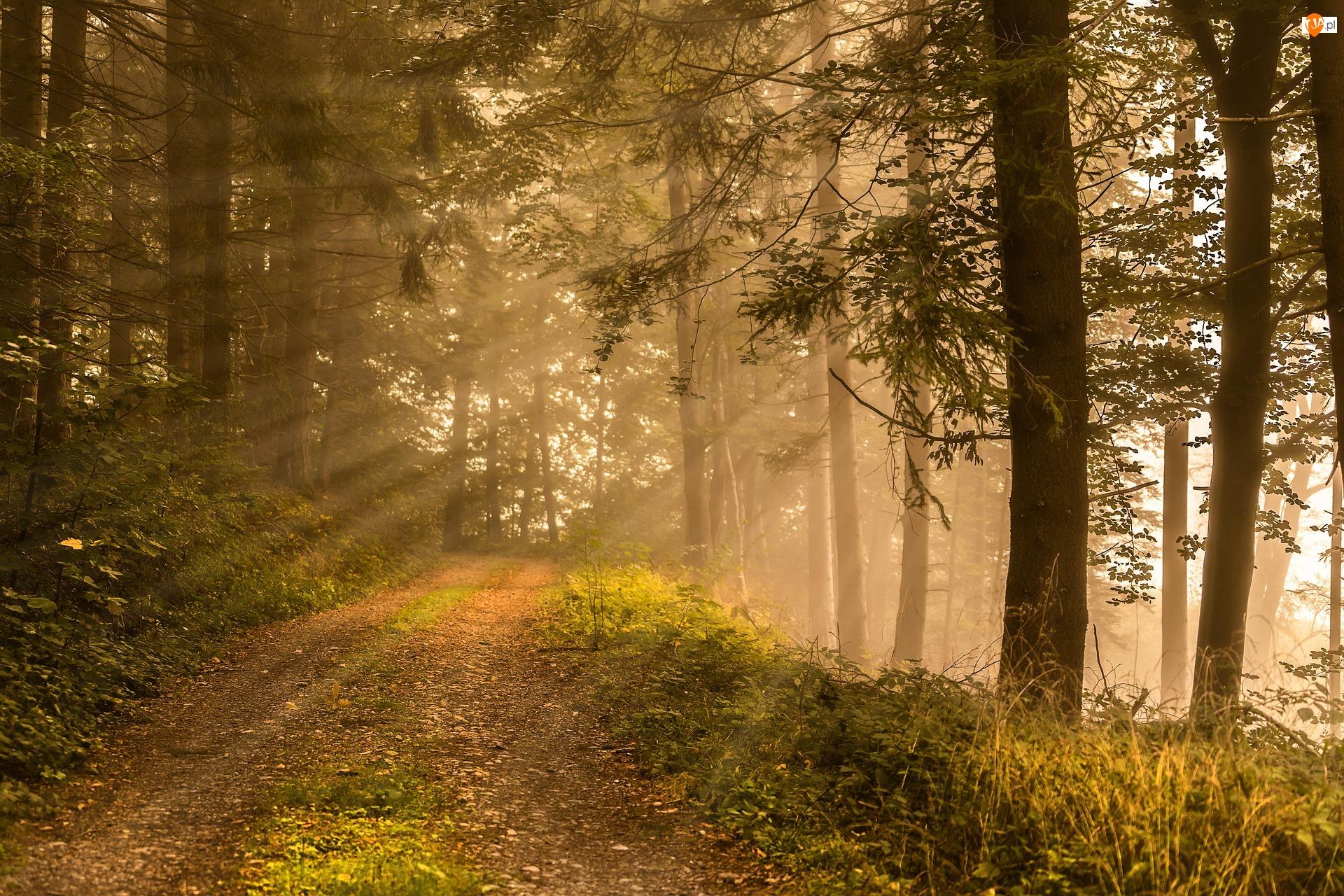 Drzewa, Przebijające światło, Droga, Las, Mgła