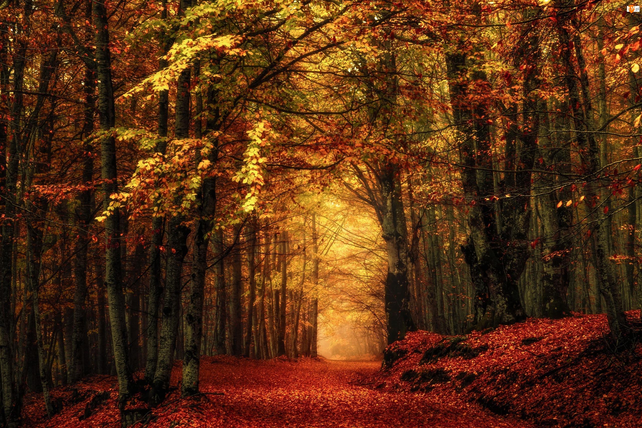 Liściasty, Droga, Las, Jesień, Drzewa