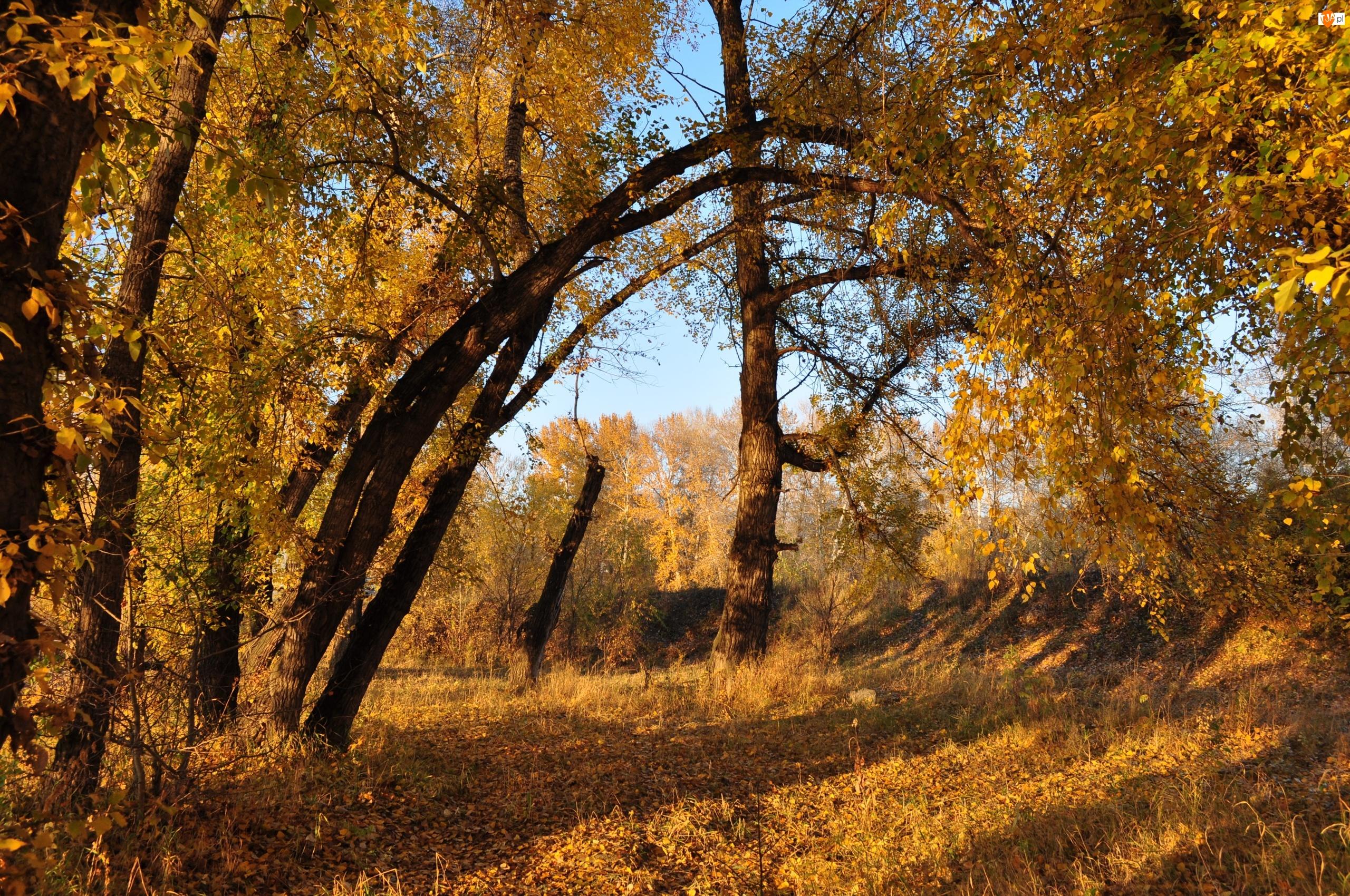 Jesień, Drzewa, Ścieżka, Liście
