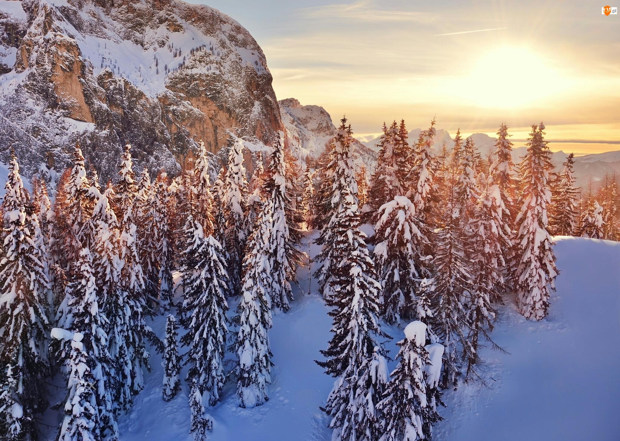 Góry, Las, Wschód słońca, Zima, Świerki, Drzewa, Ośnieżone