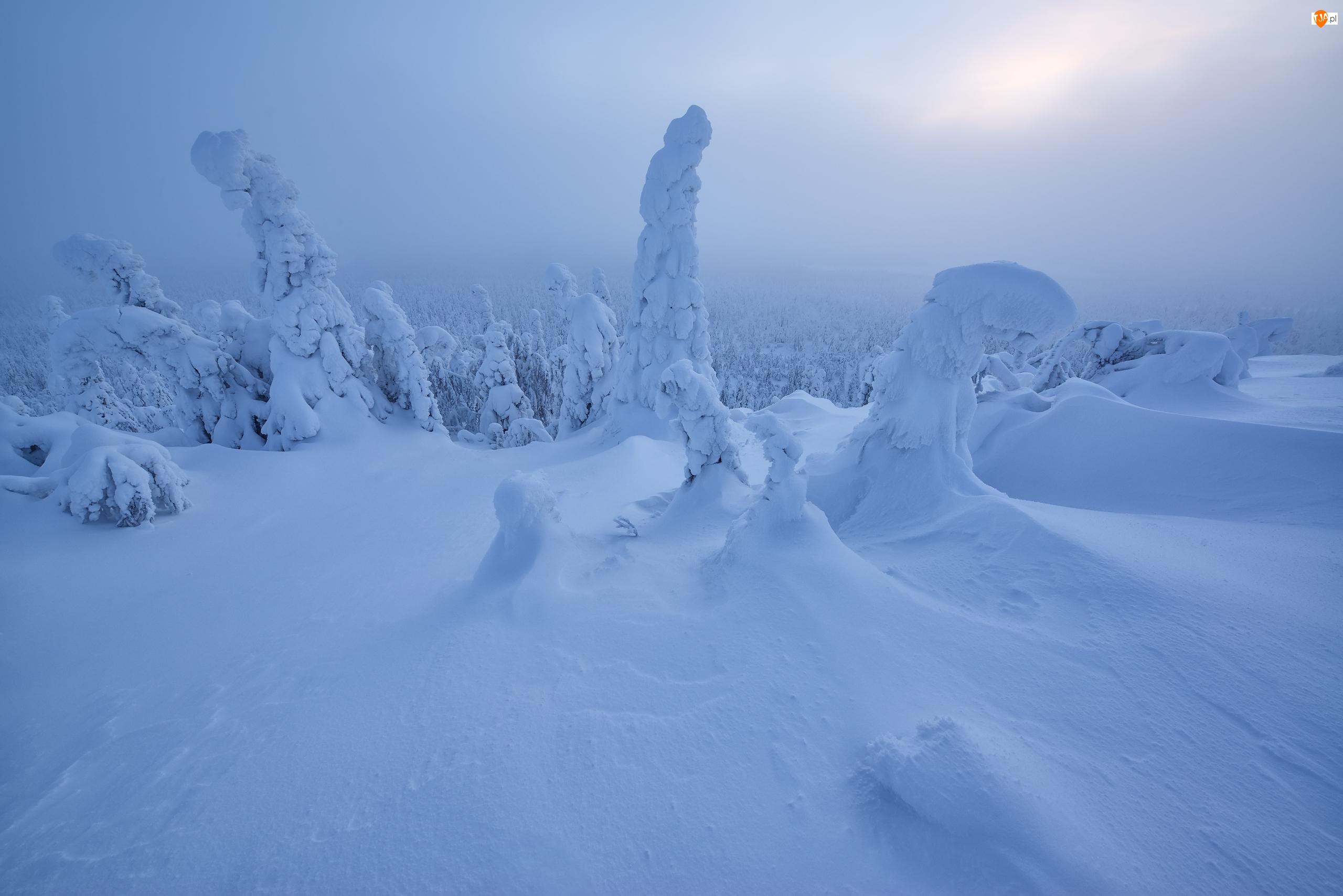 Finlandia, Zima, Ośnieżone, Słońce, Laponia, Drzewa