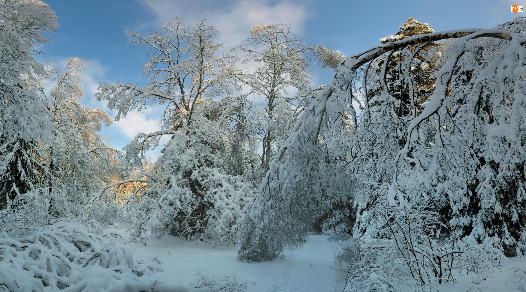 Ośnieżone, Gałęzie, Śnieg, Zima, Drzewa