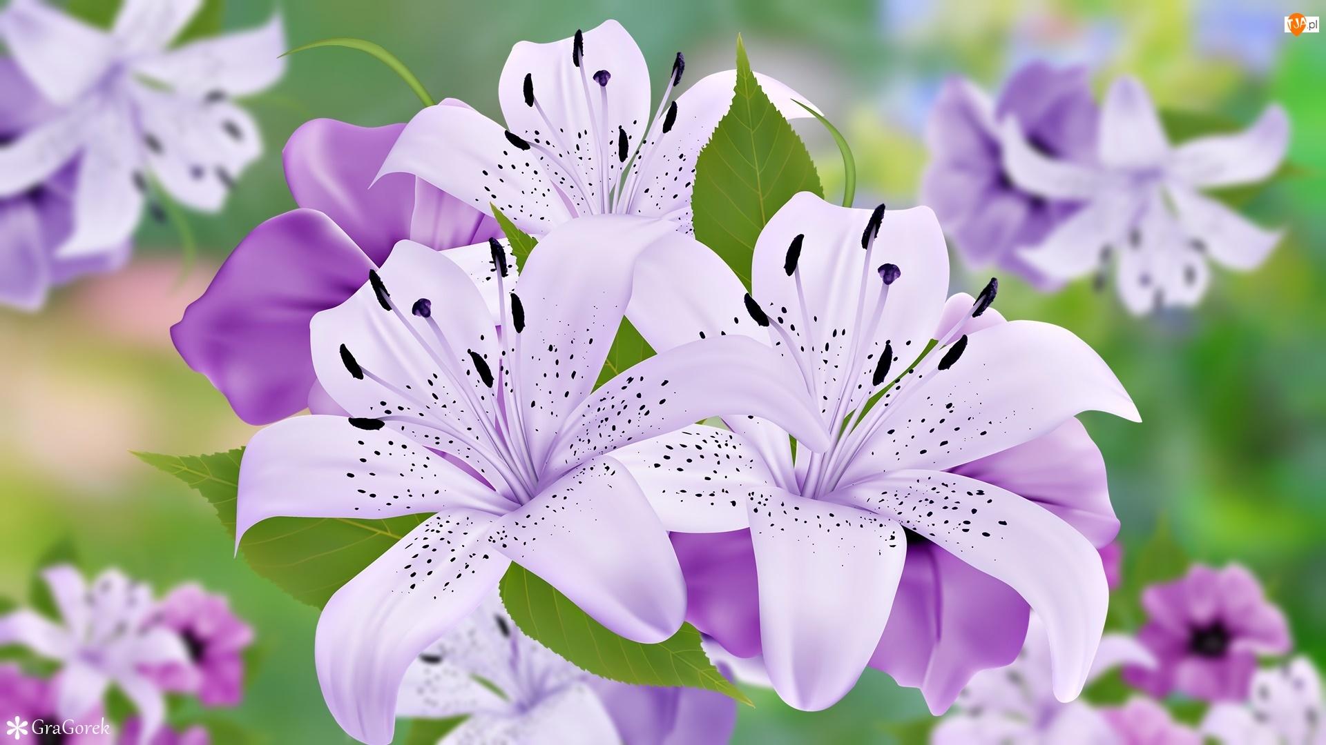 Grafika, Kwiaty, Fioletowe, Lilie