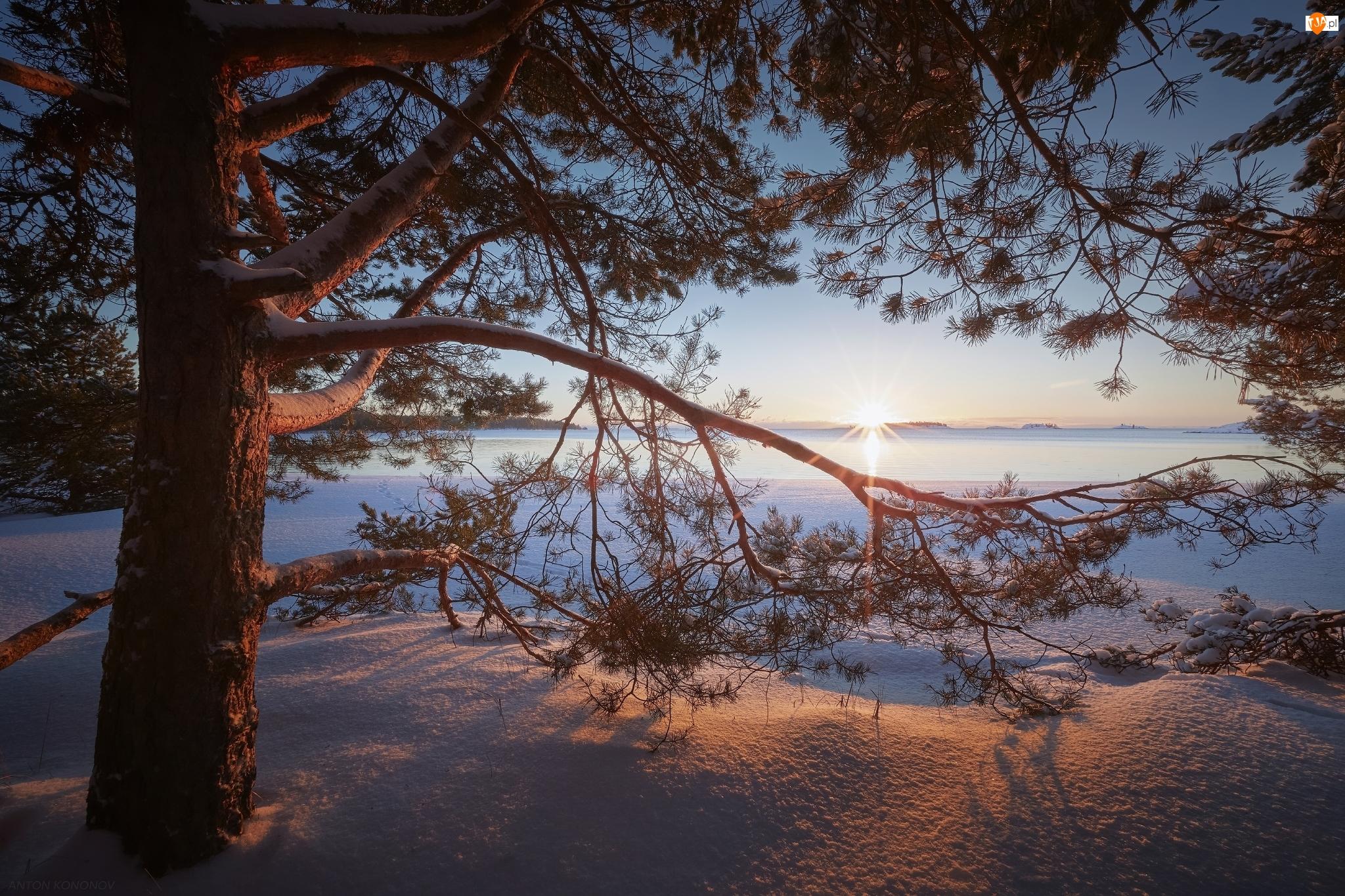 Drzewo, Sosna, Rosja, Zima, Karelia, Promienie słońca, Jezioro Ładoga