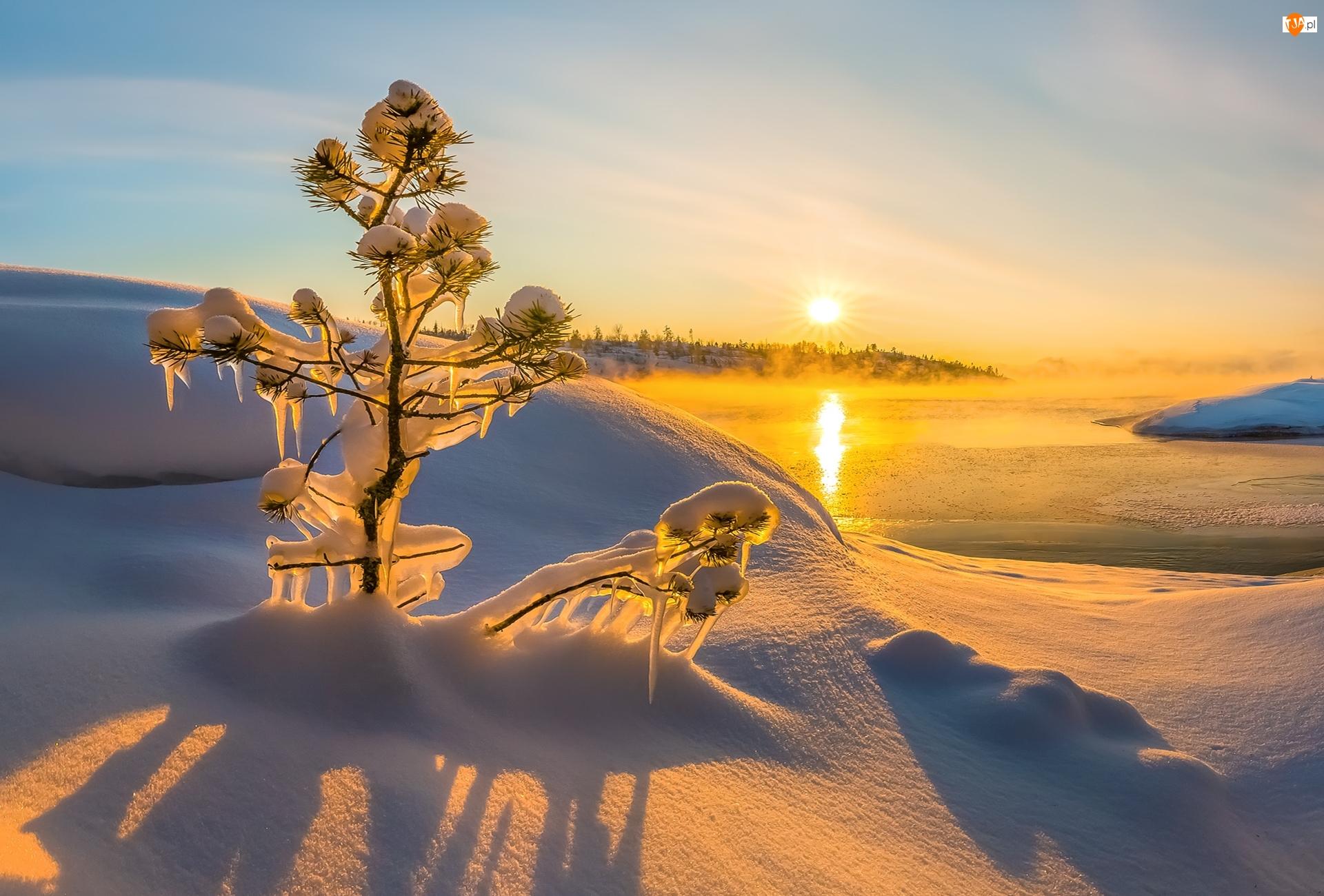 Jezioro, Zaśnieżone, Wschód słońca, Zima, Mgła, Sople, Drzewko