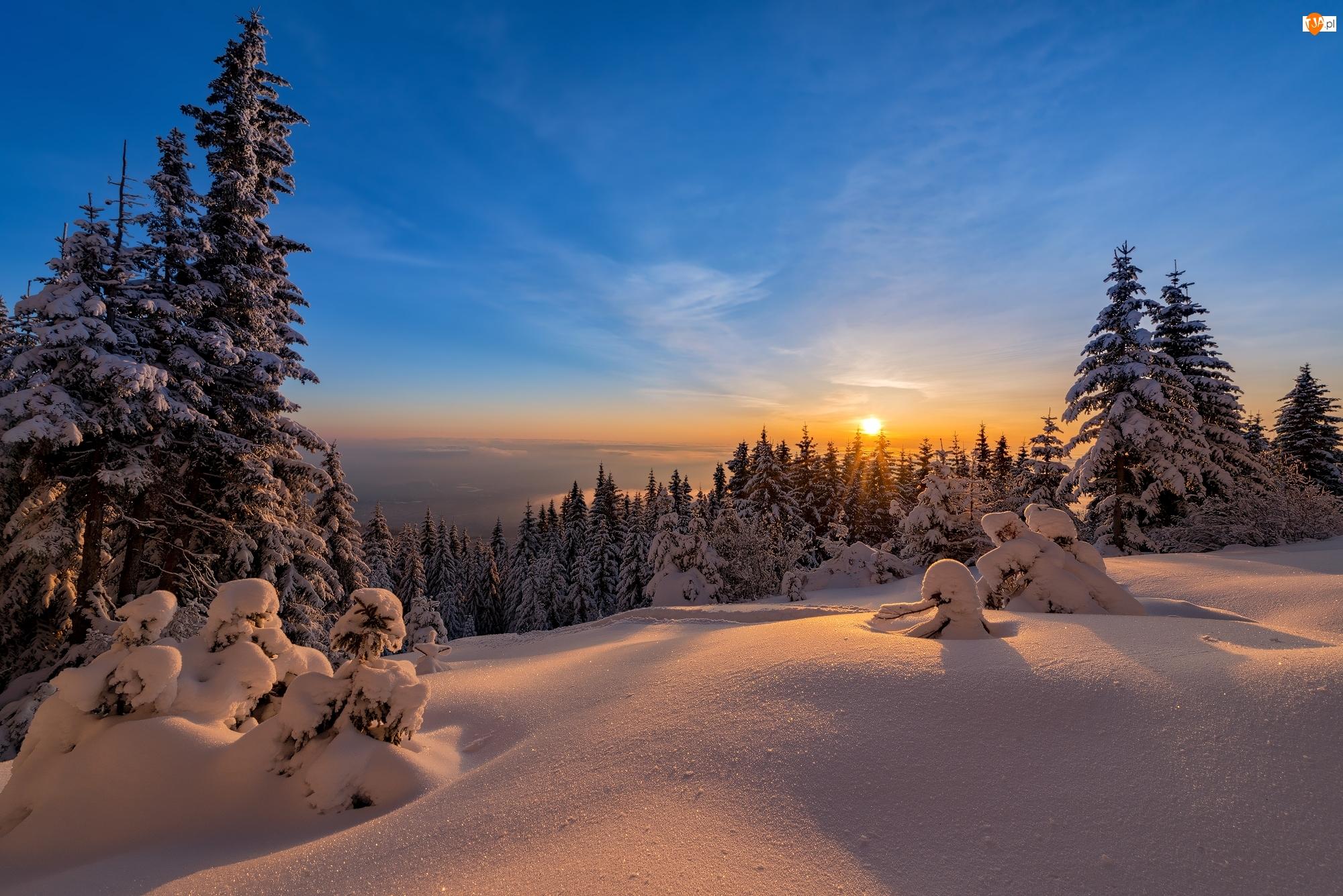 Zachód słońca, Zima, Świerki, Śnieg