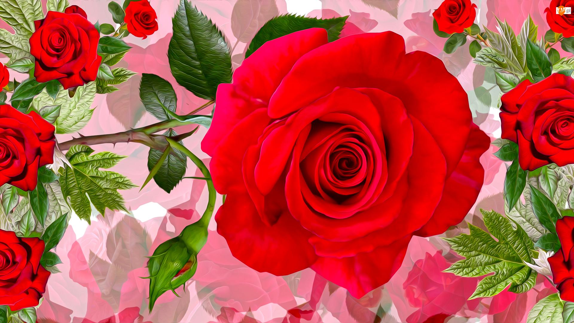 Czerwone, Pąk, Grafika, Kwiaty, Róże