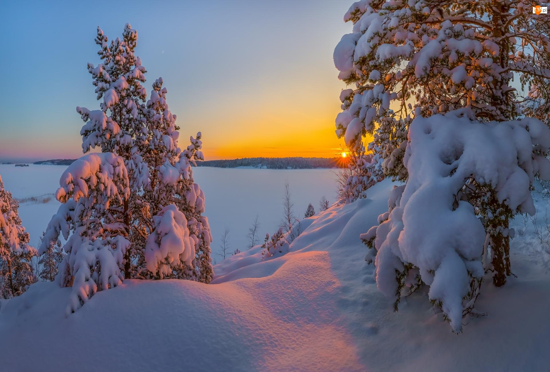 Ośnieżone, Śnieg, Wschód słońca, Zima, Drzewa