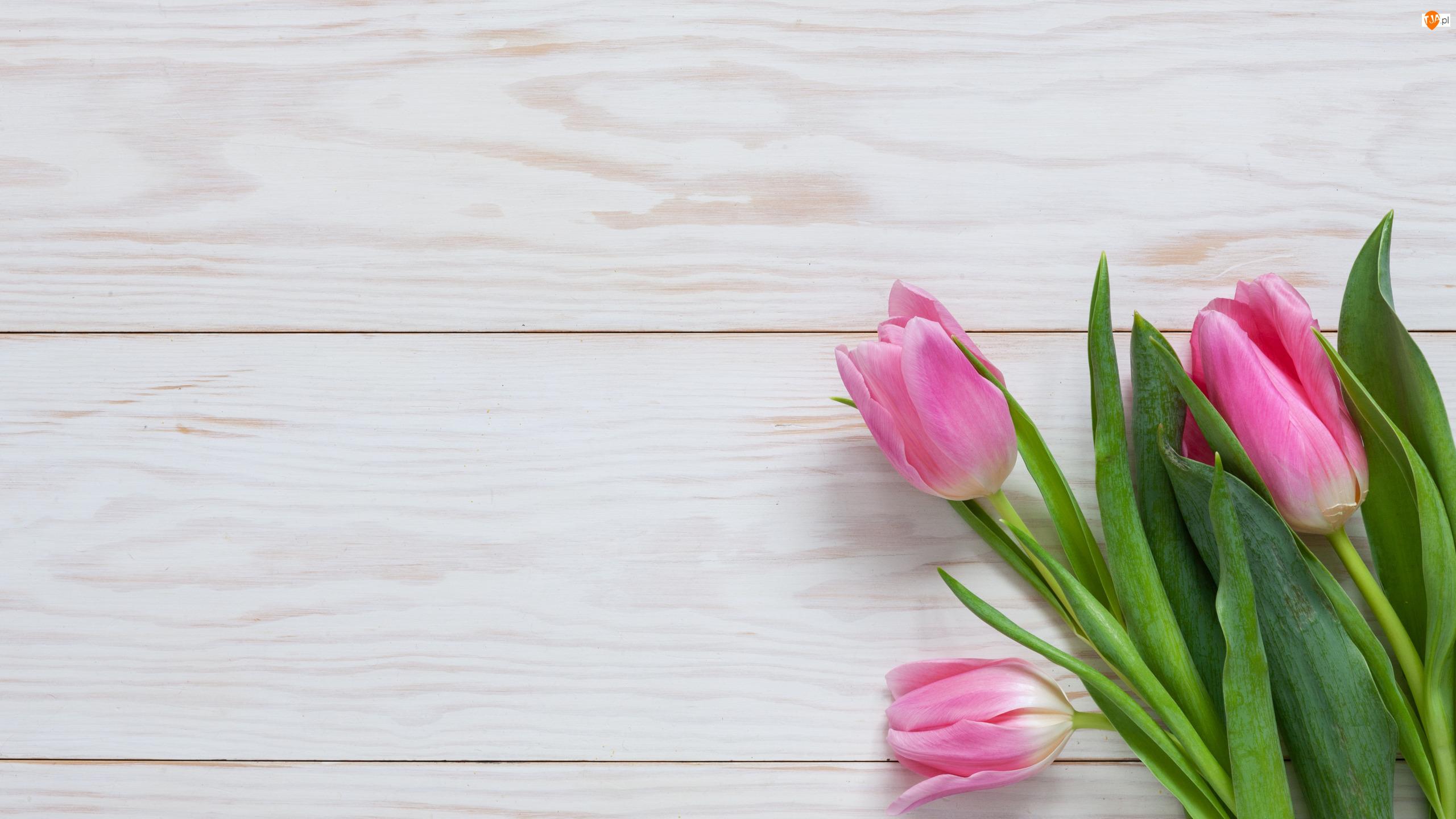 Deski, Trzy, Różowe, Tulipany