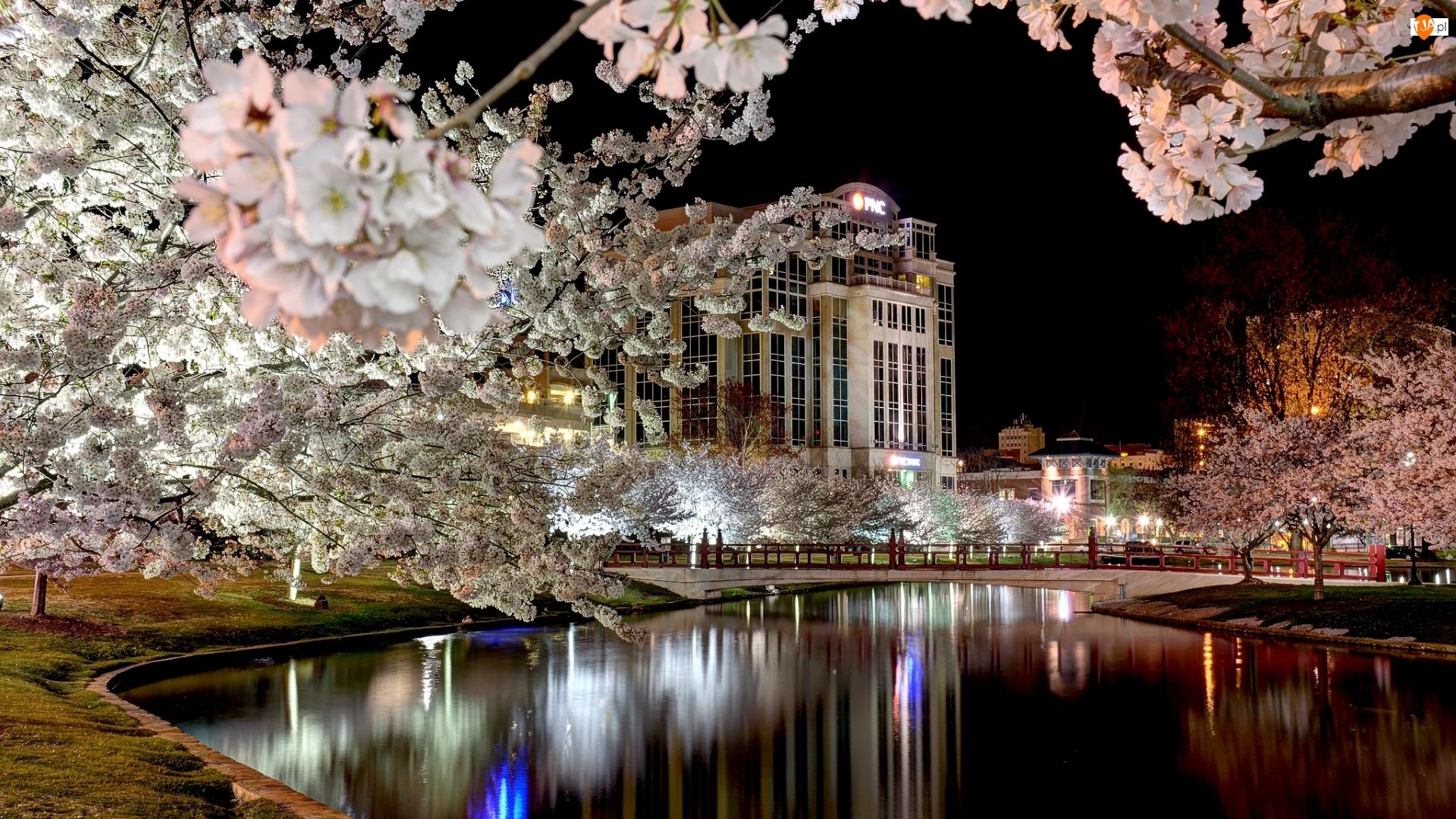 Budynek, Wiosna, Kwitnące, Domy, Rzeka, Drzewa, Noc, Most
