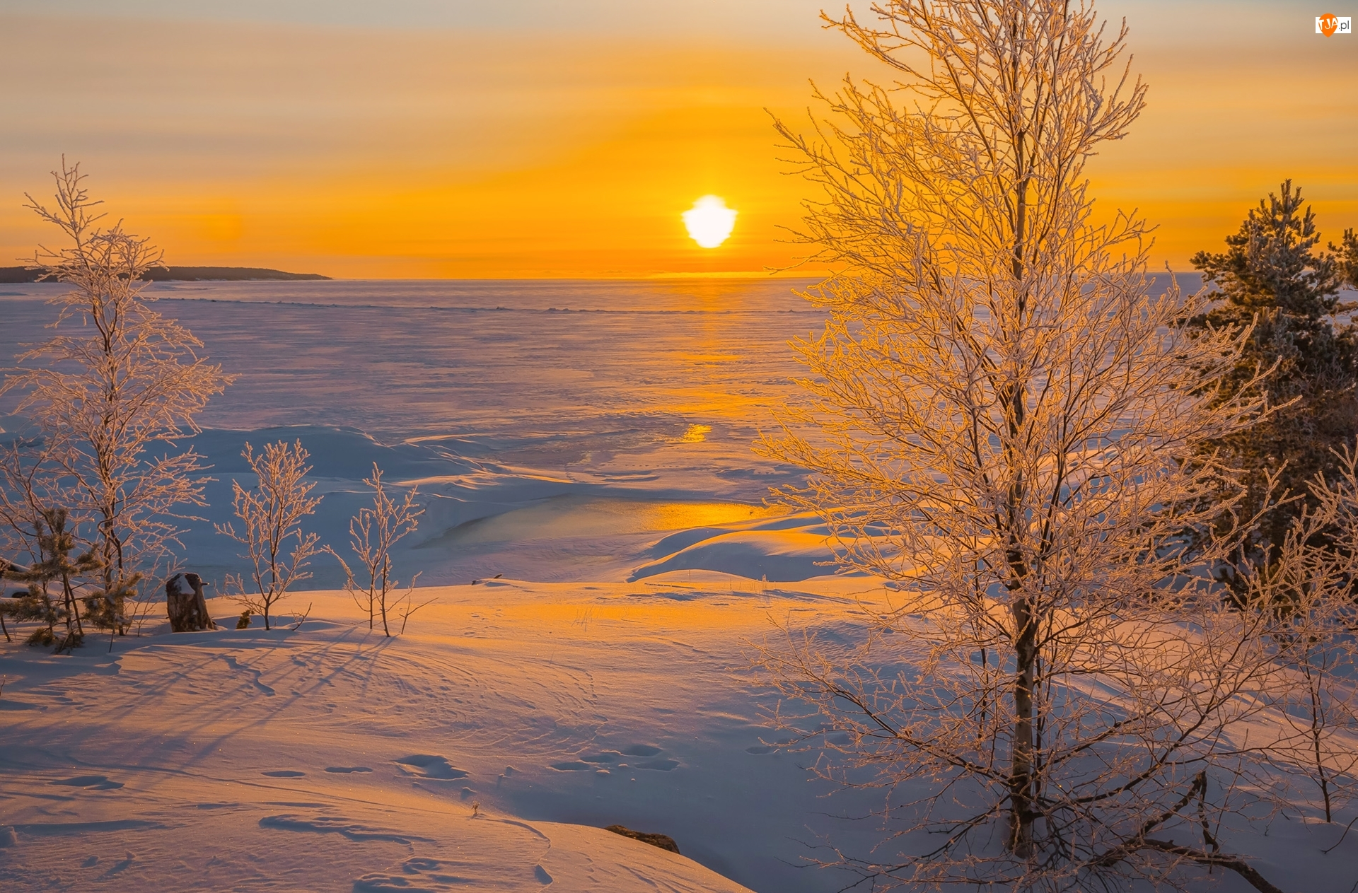 Drzewa, Roślinność, Rosja, Zima, Karelia, Jezioro Ładoga, Wschód słońca