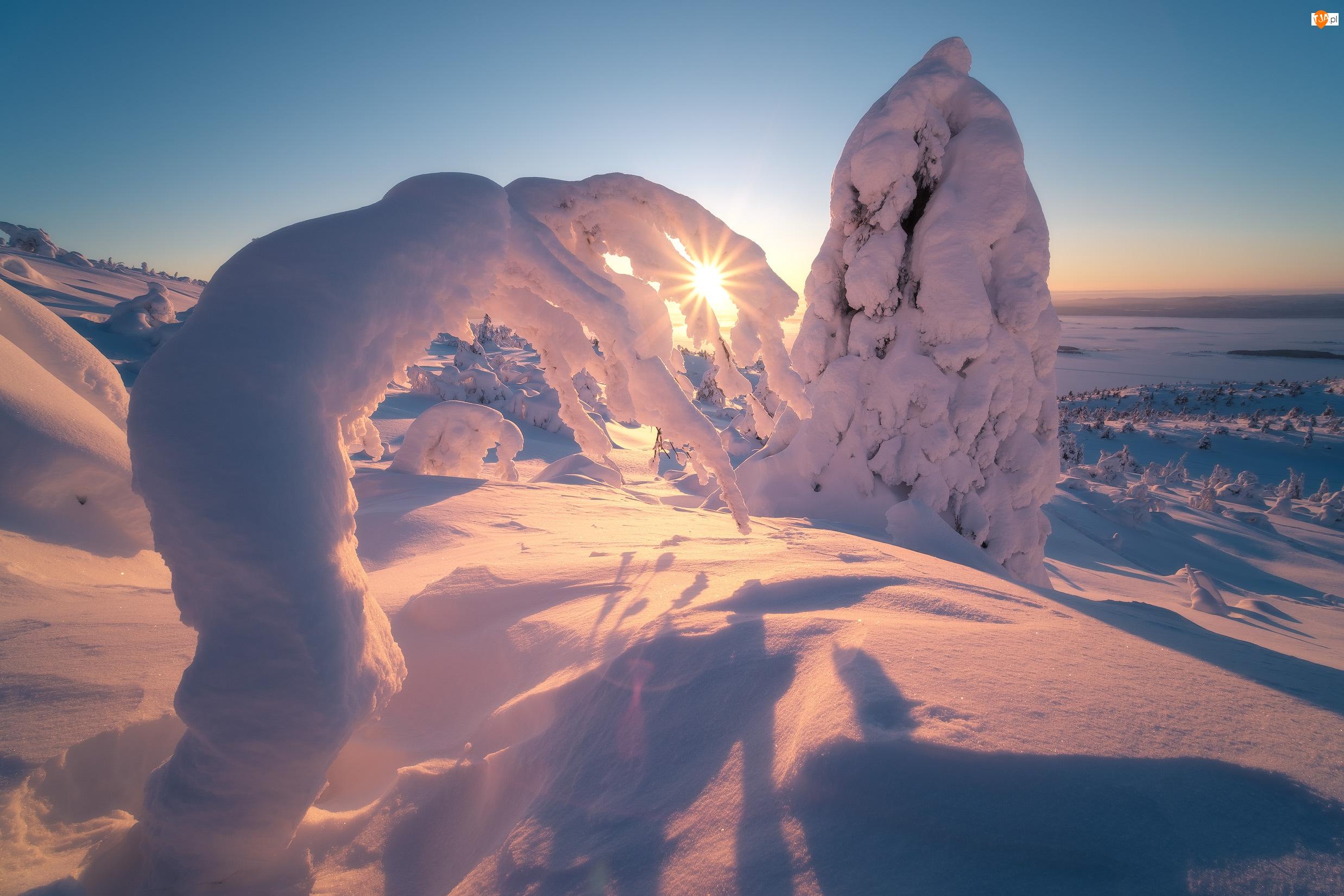 Ośnieżone, Drzewa, Rosja, Zima, Półwysep Kolski, Zatoka Kandałaksza, Promienie słońca