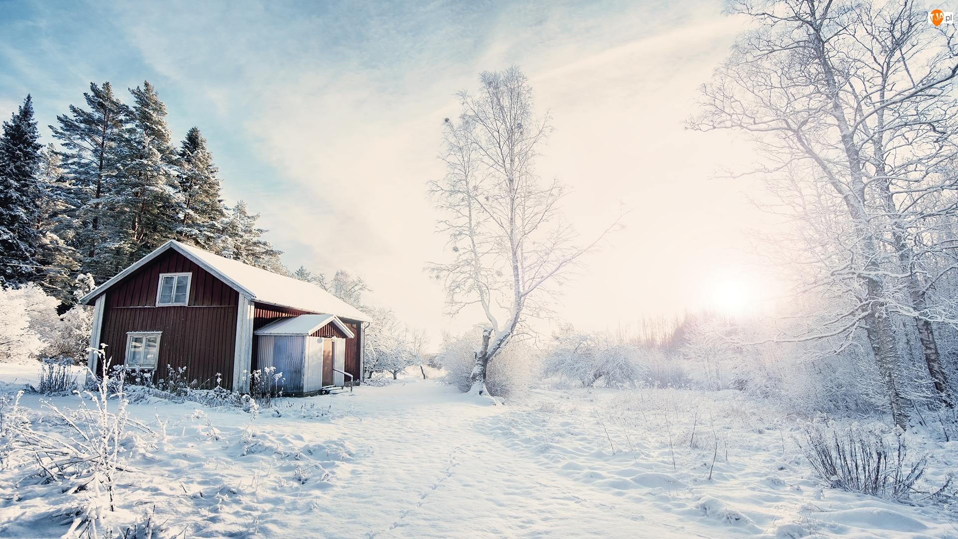 Dom, Wschód słońca, Drzewa, Zima, Droga
