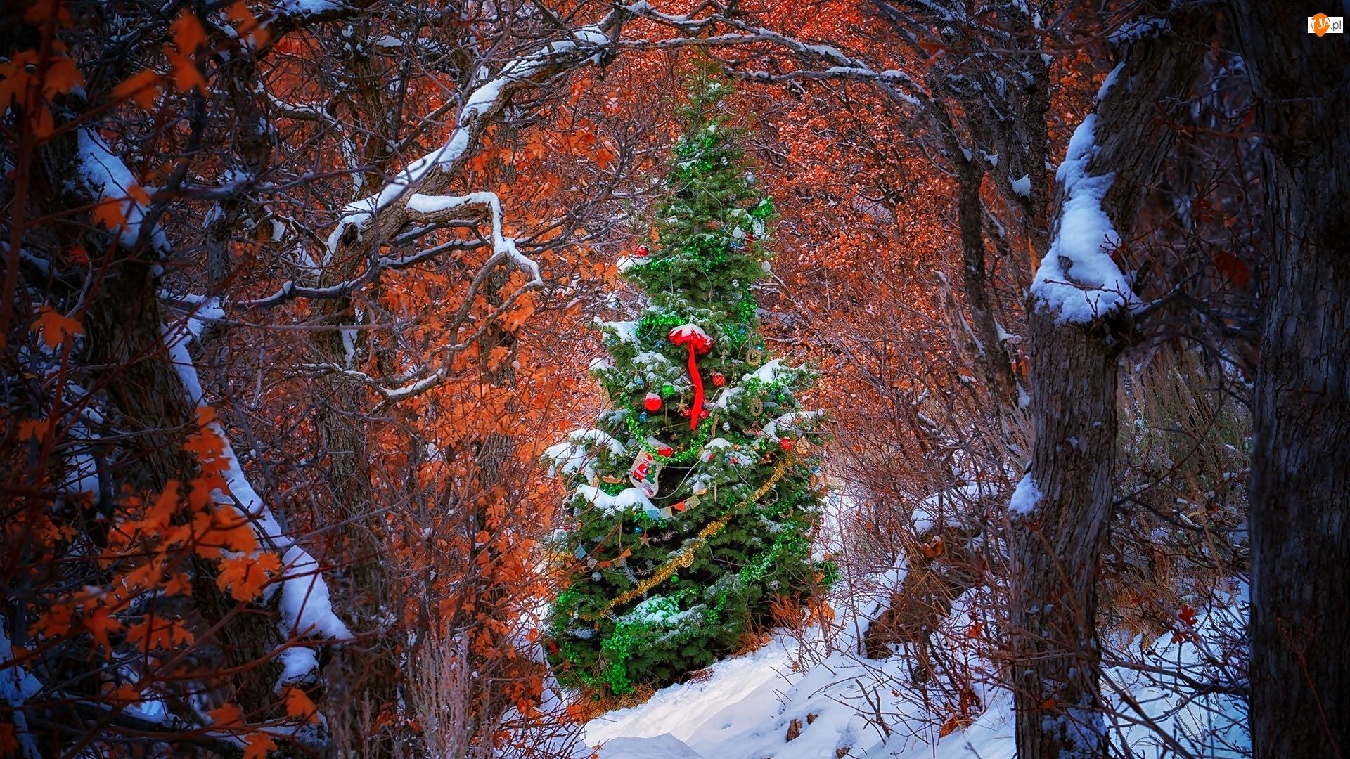 Ozdobiona, Choinka, Boże Narodzenie, Świąteczna, Zima, Drzewa, Las