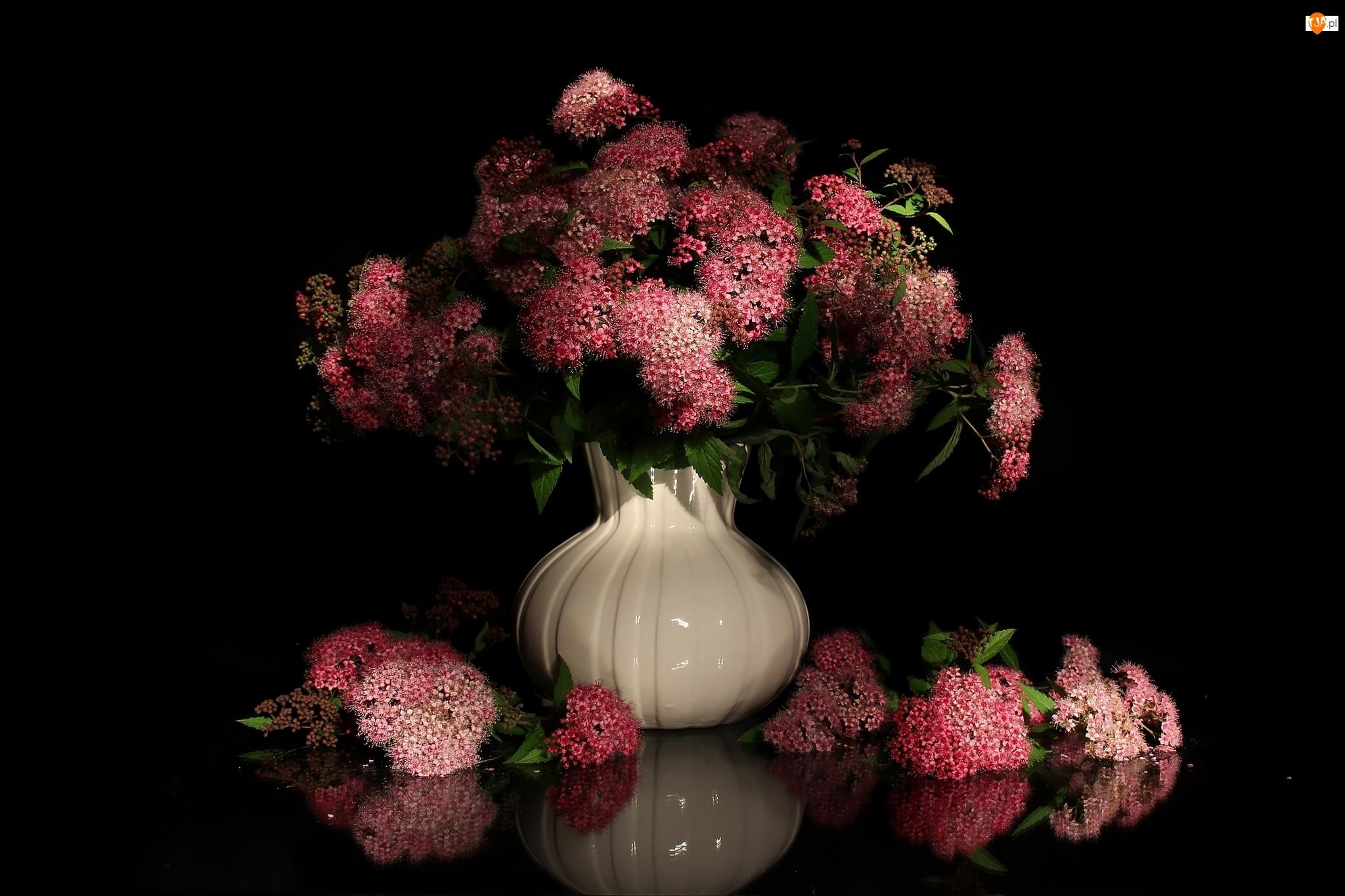 Tawuła japońska, Kwiaty, Bukiet, Wazon