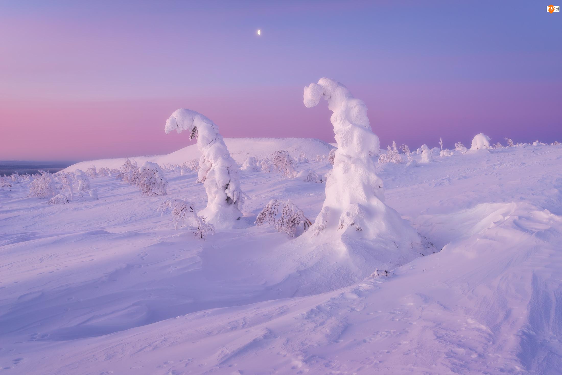 Drzewa, Góry, Zaśnieżone, Zima, Śnieg
