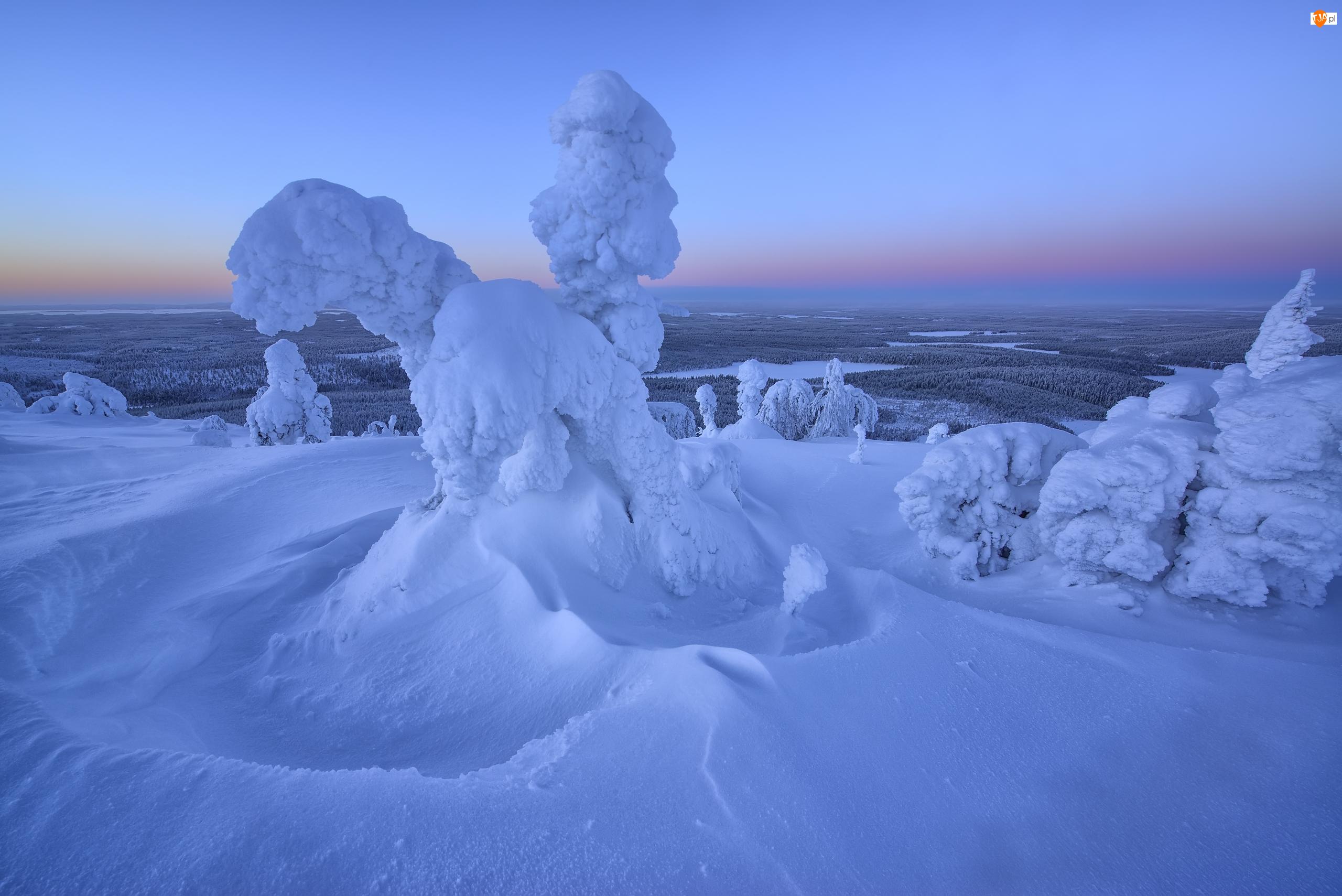 Rezerwat Valtavaara, Zima, Wschód słońca, Laponia, Drzewa, Wzgórze, Finlandia, Mgła