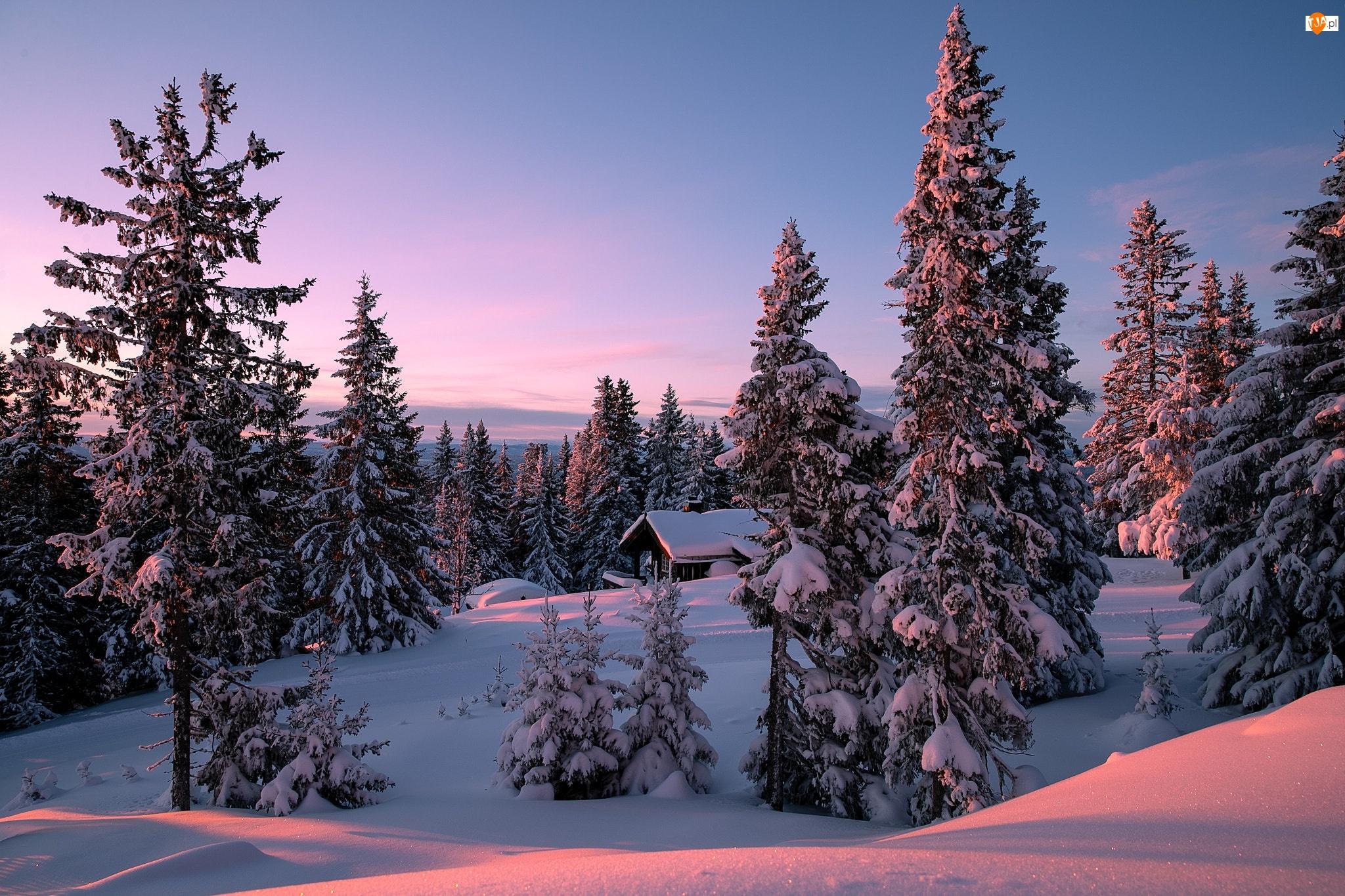 Wzgórza, Drzewa, Zima, Świerki, Dom, Ośnieżone
