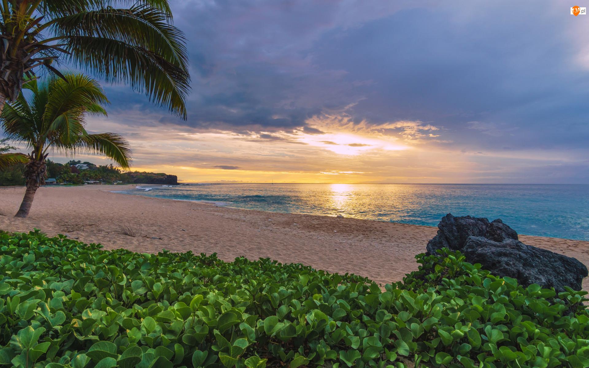 Morze, Piasek, Wschód słońca, Roślinność, Plaża, Palmy