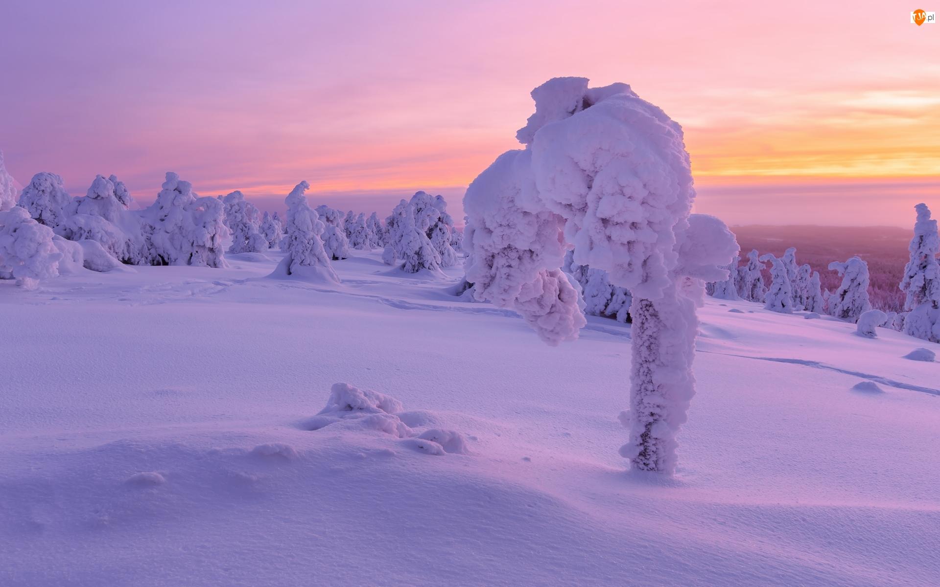 Ośnieżone, Zachód słońca, Zima, Śnieg, Drzewa