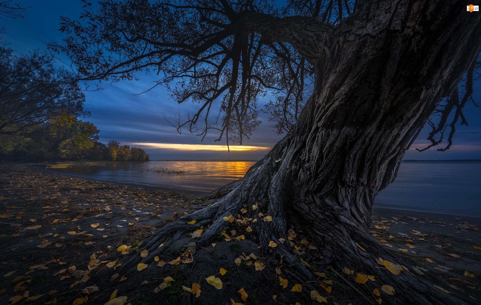 Jezioro, Zmrok, Liście, Drzewo, Brzeg