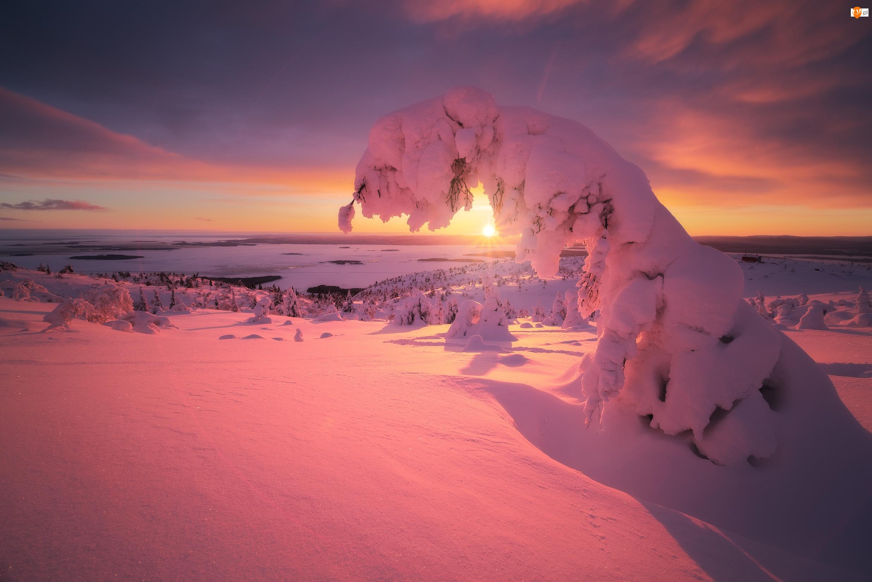 Zatoka Kandałaksza, Zima, Drzewo, Półwysep Kolski, Pochylone, Zachód słońca, Rosja, Osnieżone