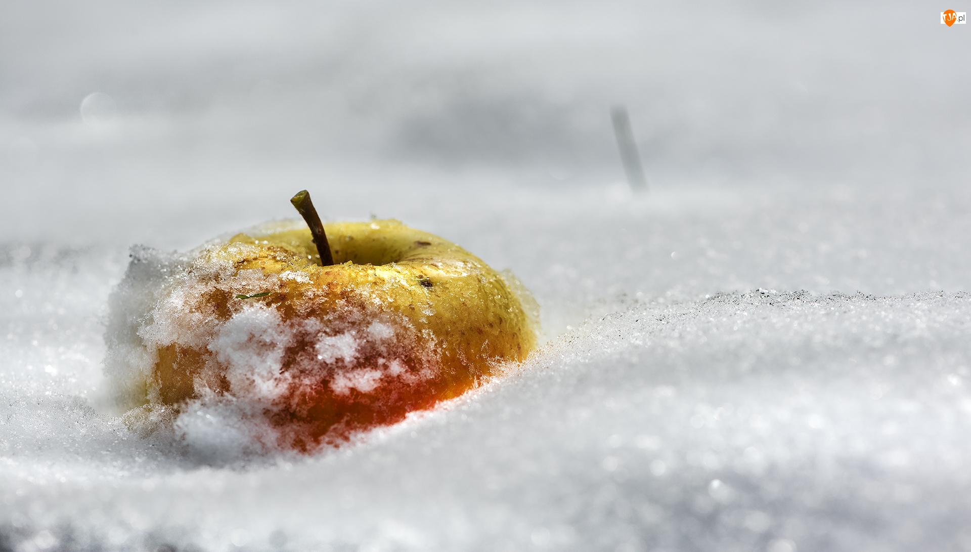 Jabłko, Śnieg