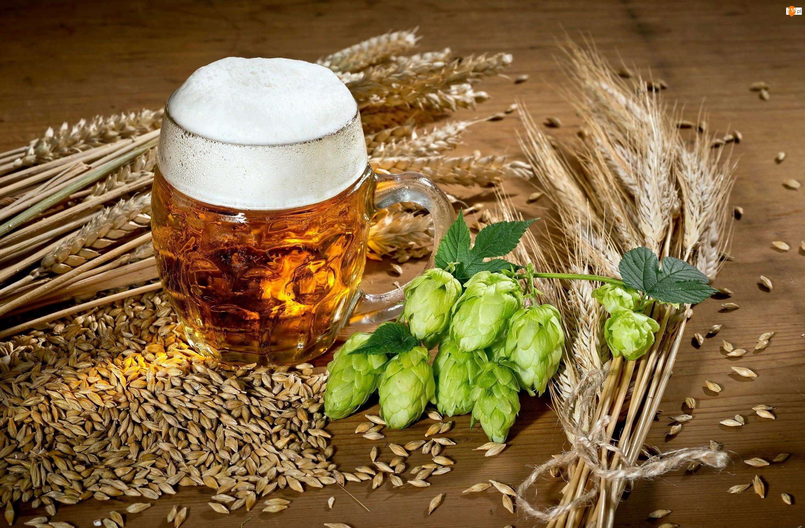 Zboże, Piwo, Kufel, Chmiel