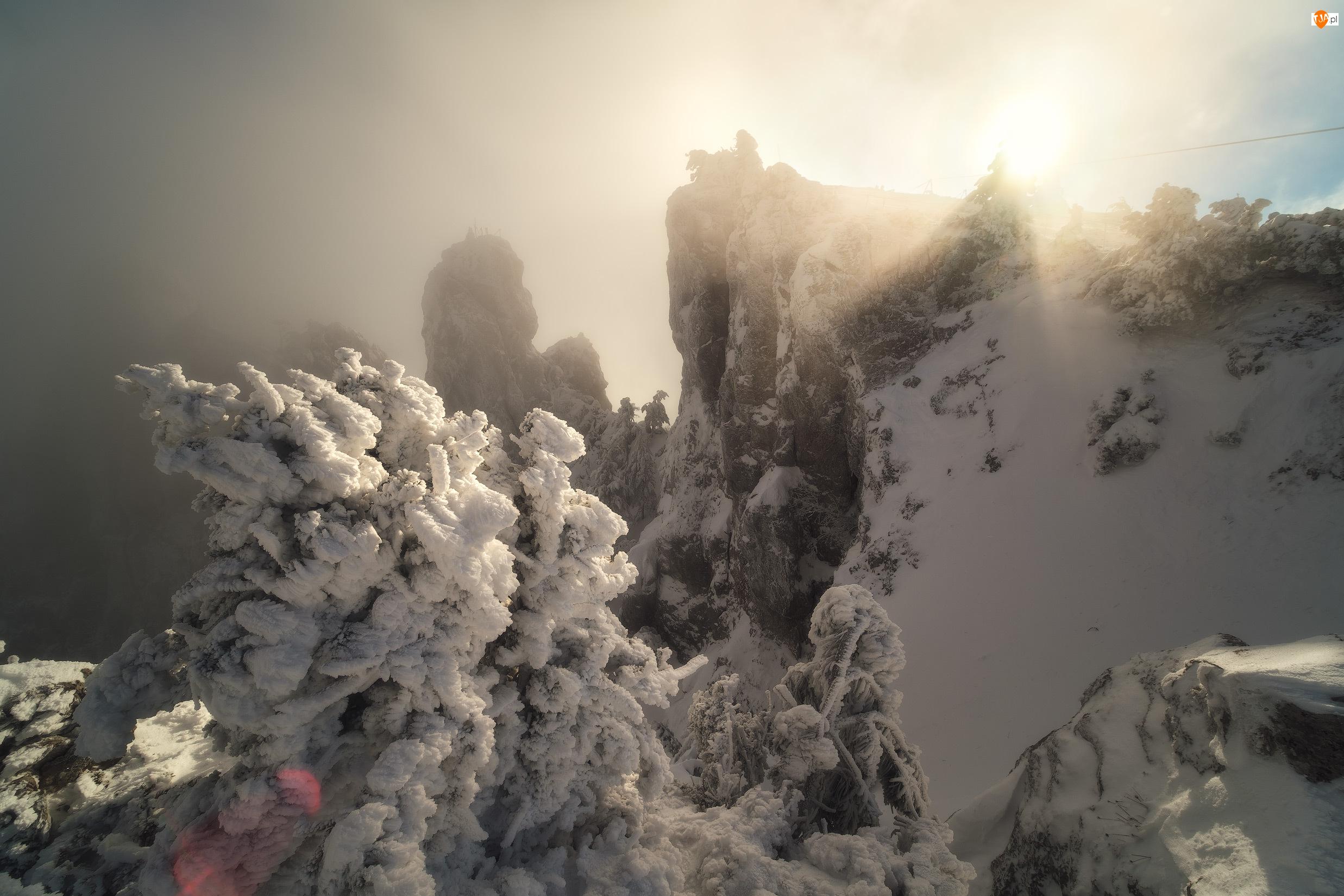Drzewa, Promienie słońca, Krym, Zima, Szczyt Aj-Petri, Śnieg, Góry Krymskie