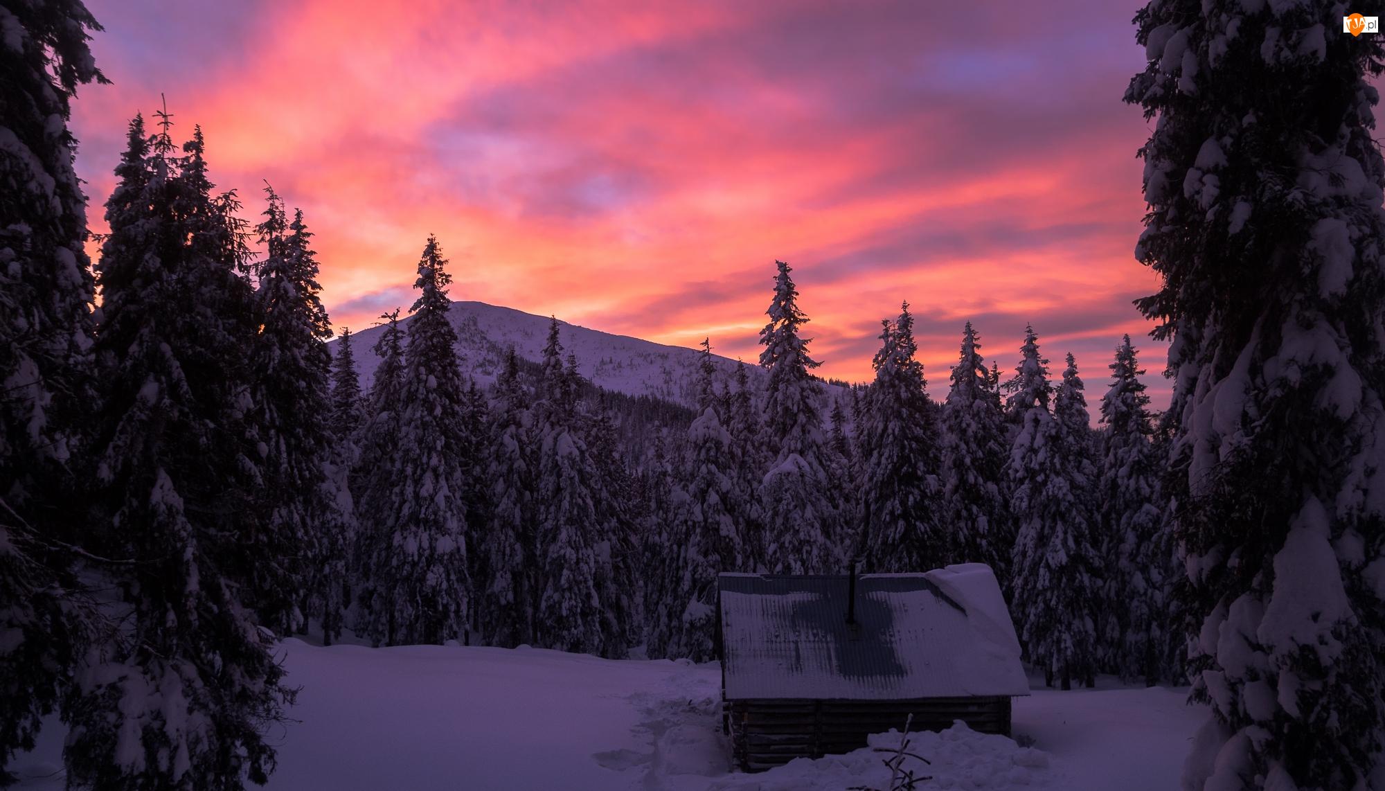 Ukraina, Góry, Wschód słońca, Drewniana, Chata, Karpaty, Drzewa, Zima, Las