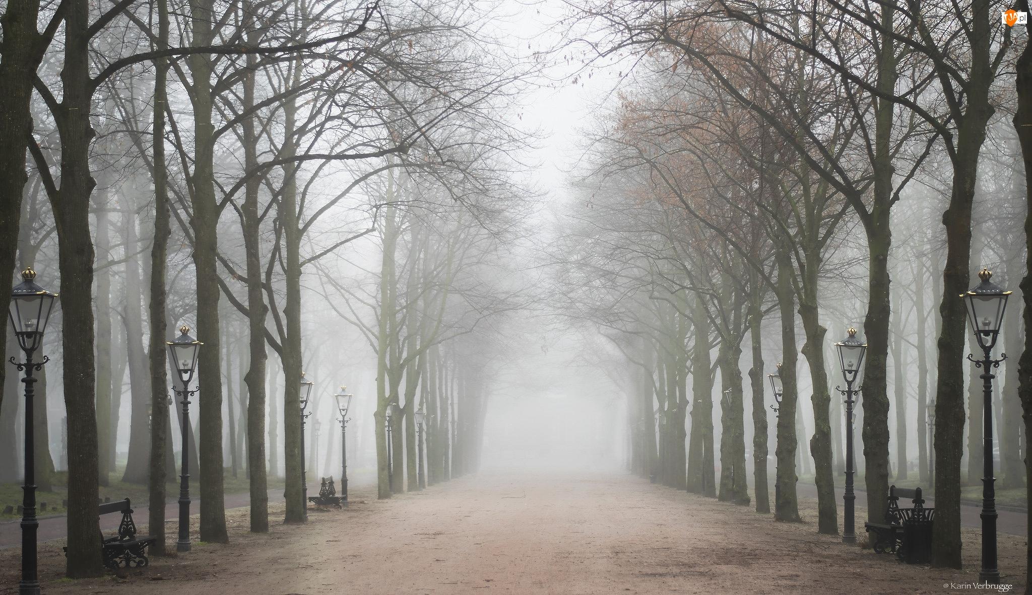 Alejka, Mgła, Latarnie, Park, Ławki, Szpalery, Drzewa
