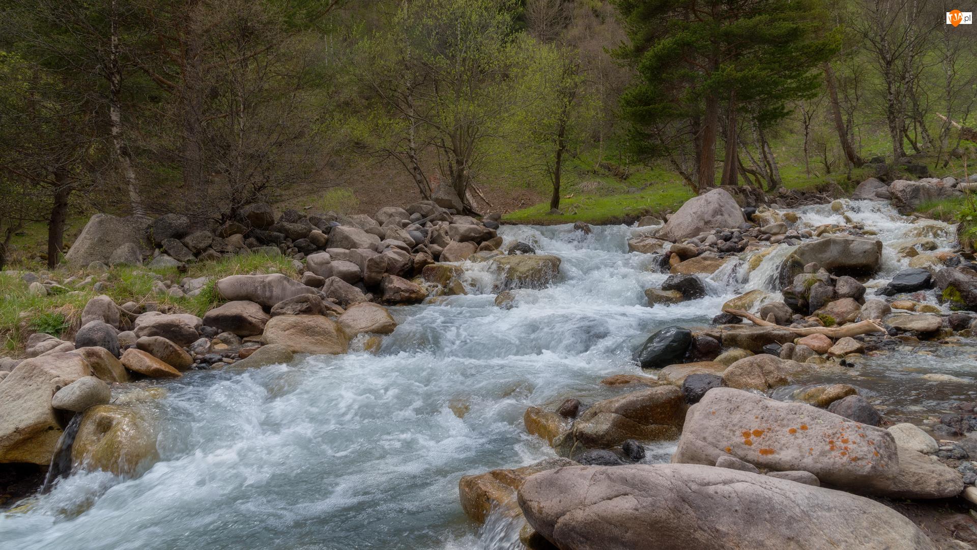 Strumień, Drzewa, Rzeka, Las, Kamienie