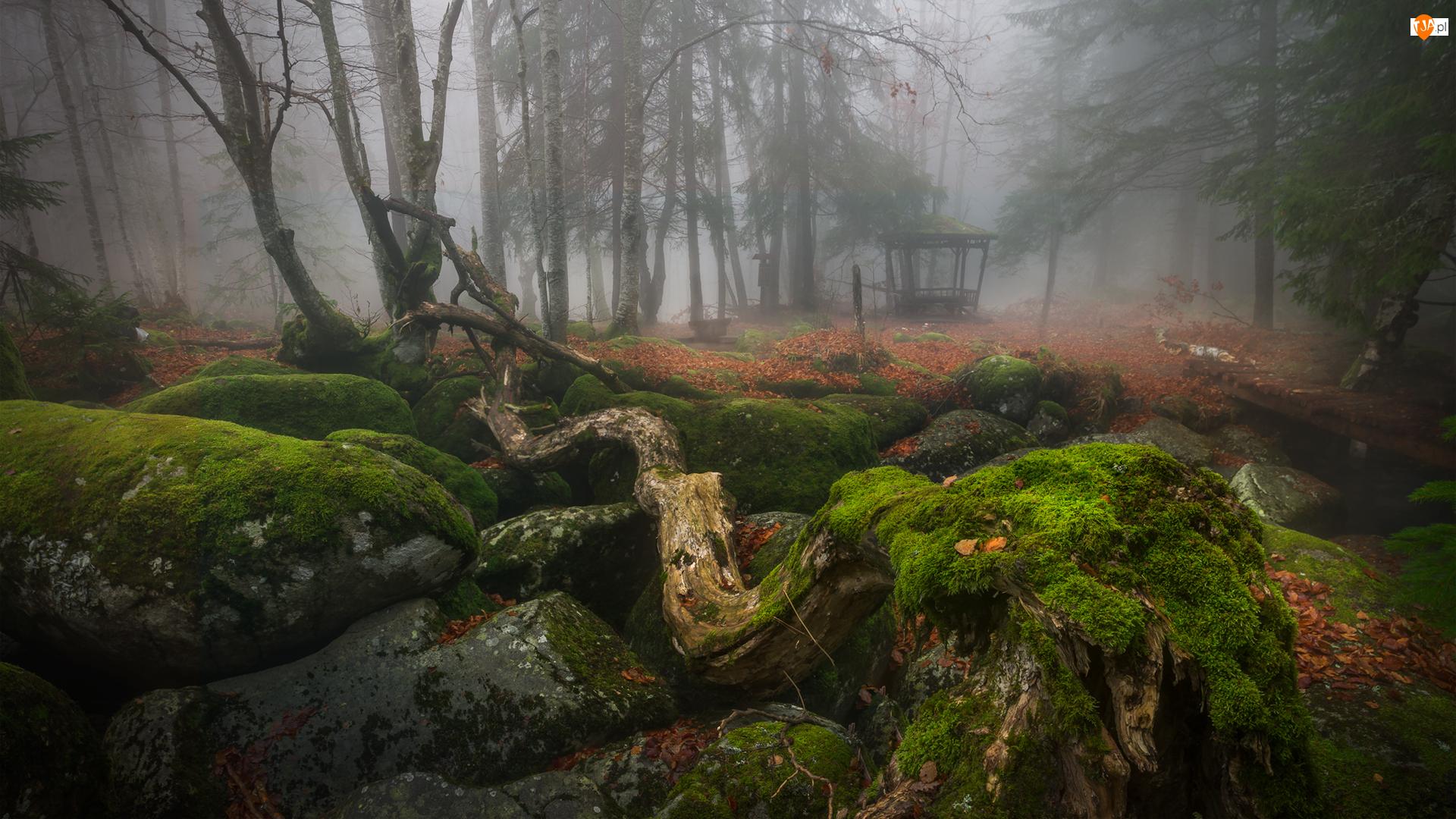 Drzewa, Omszałe, Mgła, Park, Altanka, Kamienie, Pnie