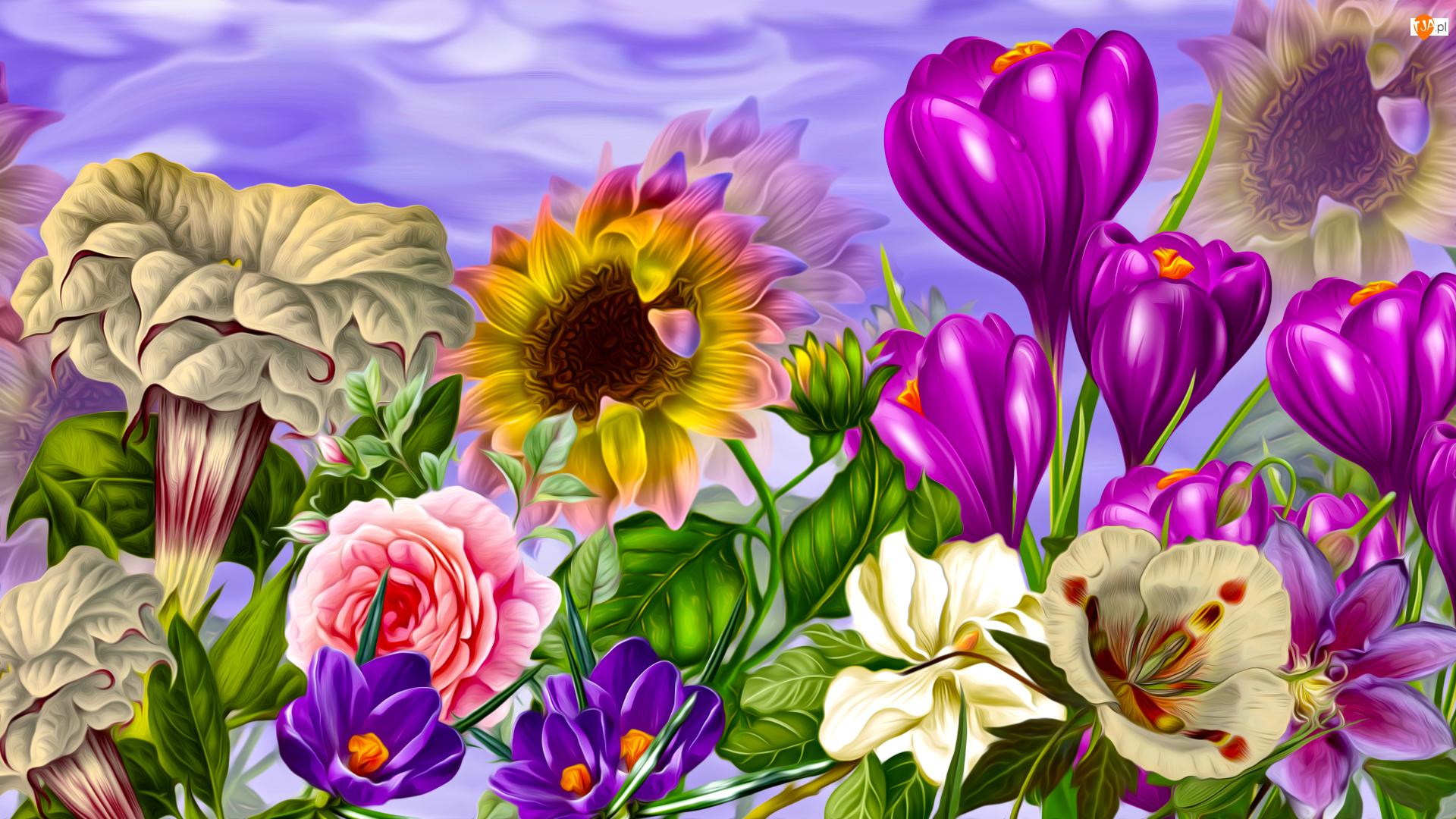 Krokus, Grafika, Słonecznik, Kwiaty, Róża