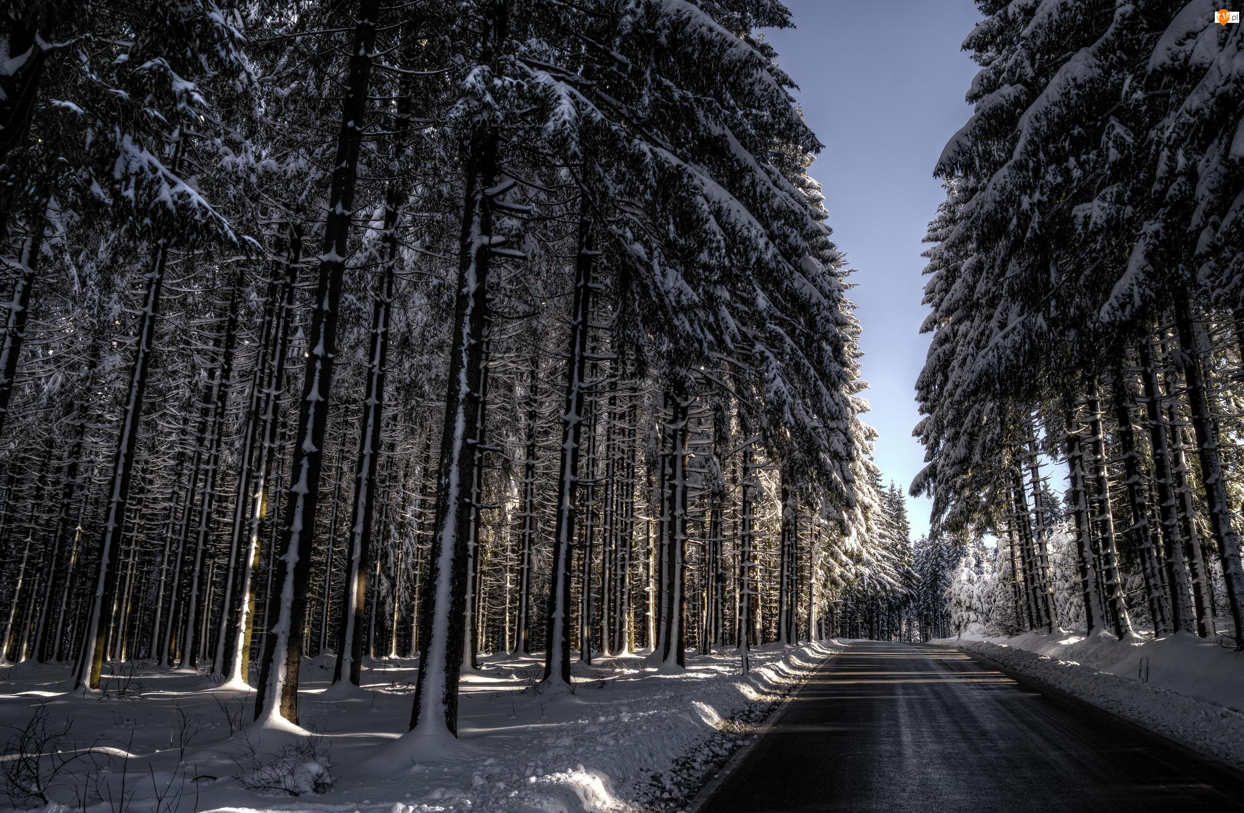 Zima, Drzewa, Droga, Las, Wysokie