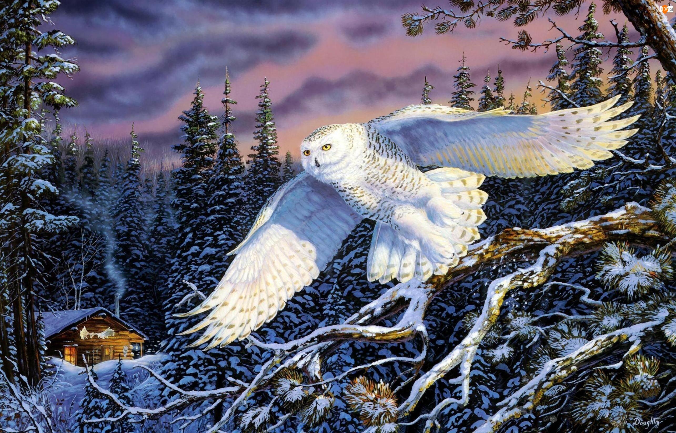 Zimowa, Terry Doughty, Sowa śnieżna, Biała, Sceneria