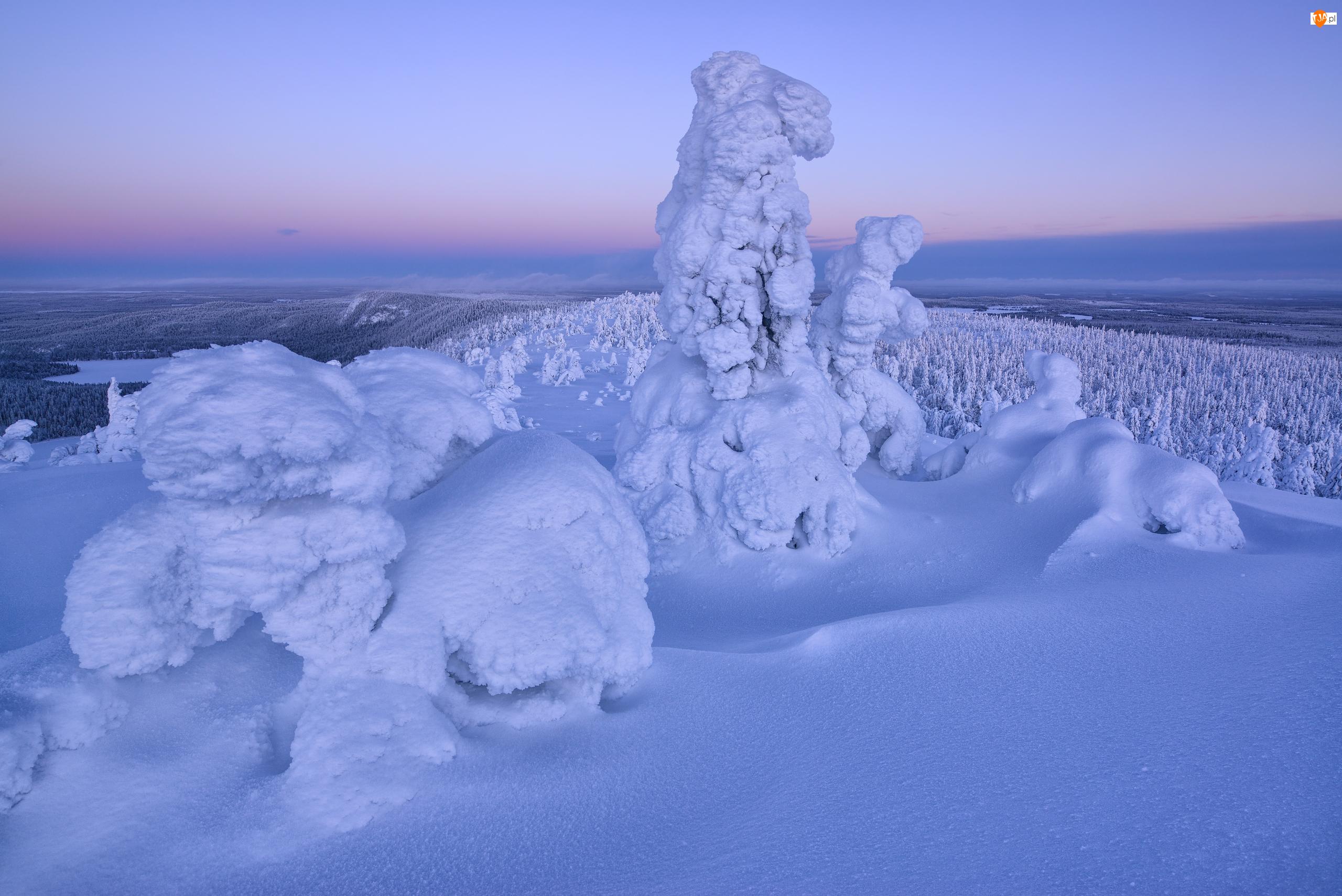Zaśnieżone, Zima, Rezerwat Valtavaara, Finlandia, Drzewa, Laponia