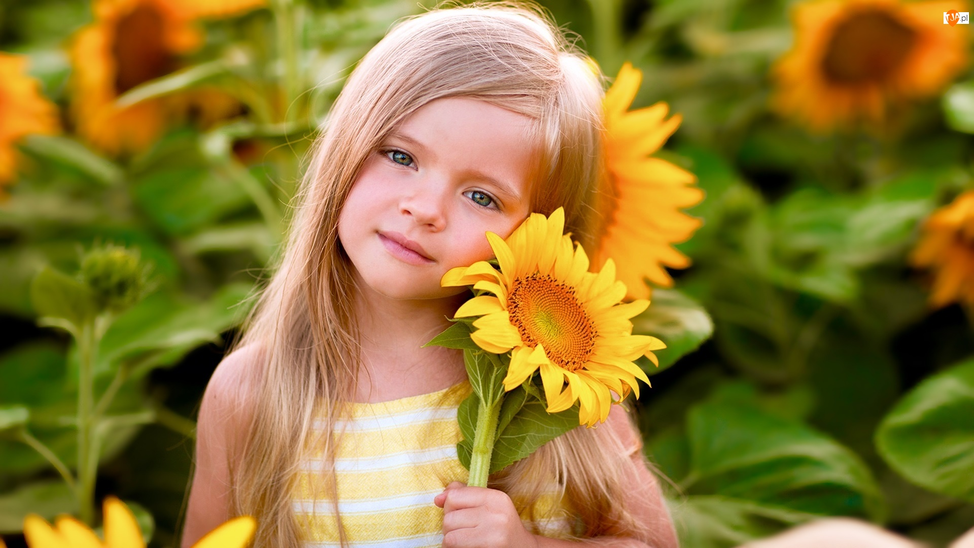 Słoneczniki, Dziewczynka, Blondynka