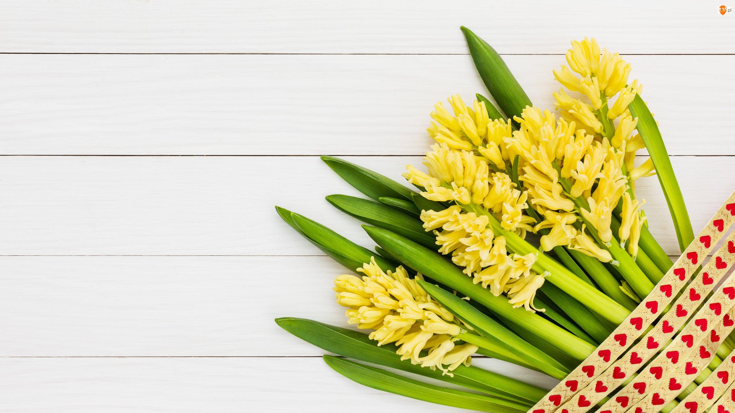 Wstążka, Kwiaty, Żółte, Hiacynty