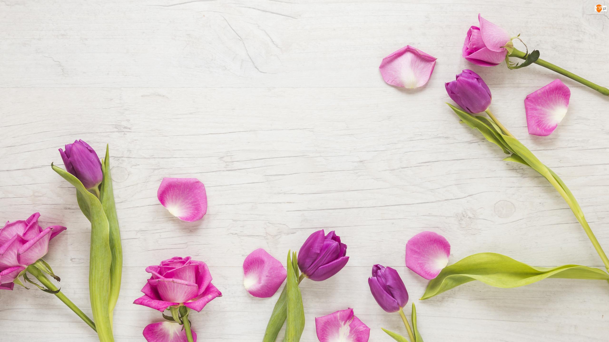 Płatki, Róże, Tulipany