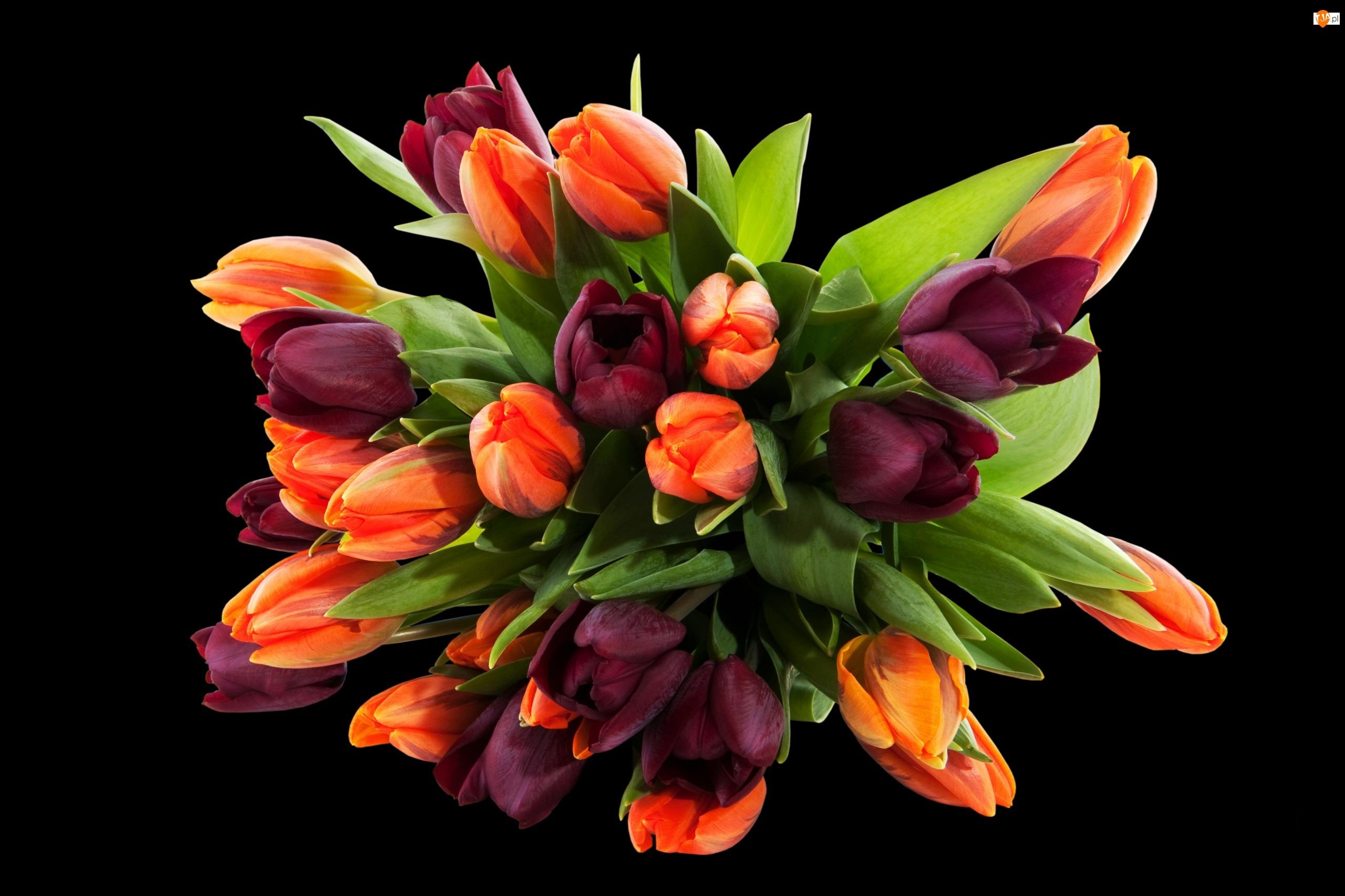 Czarne Tło, Tulipany, Bukiet