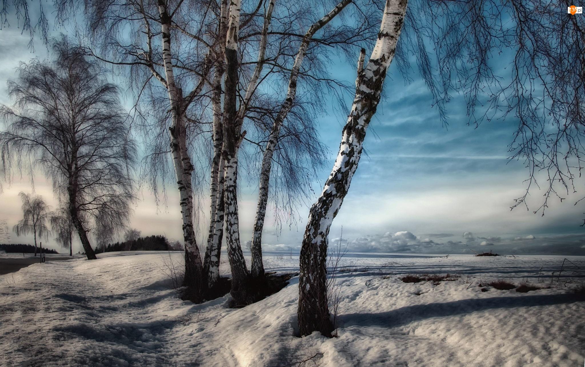 Zima, Drzewa, Brzozy, Droga