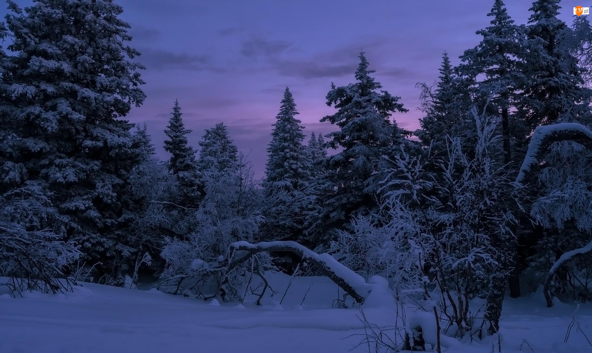 Zmrok, Zima, Drzewa