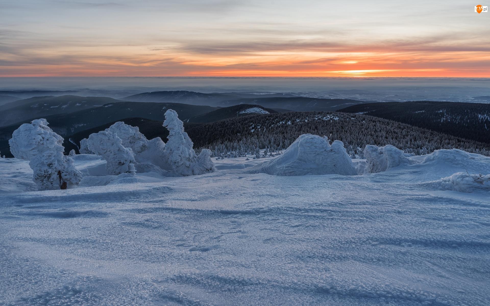 Ośnieżone, Zachód słońca, Wzgórza, Zima, Drzewa